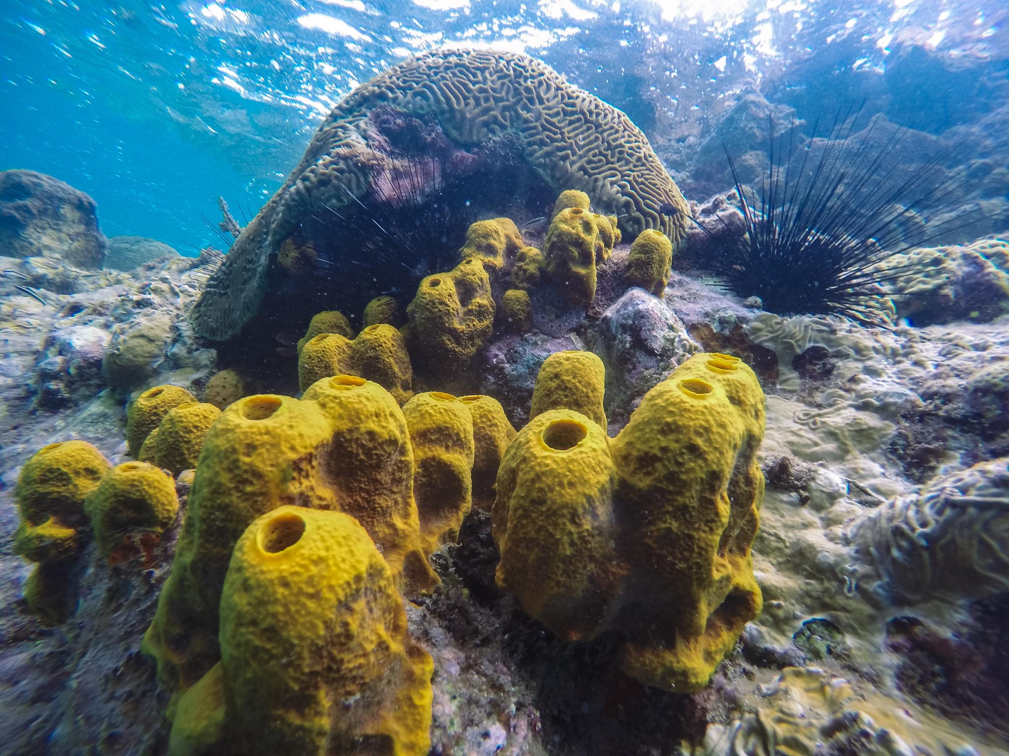 champagne-reef-plongée-dominique