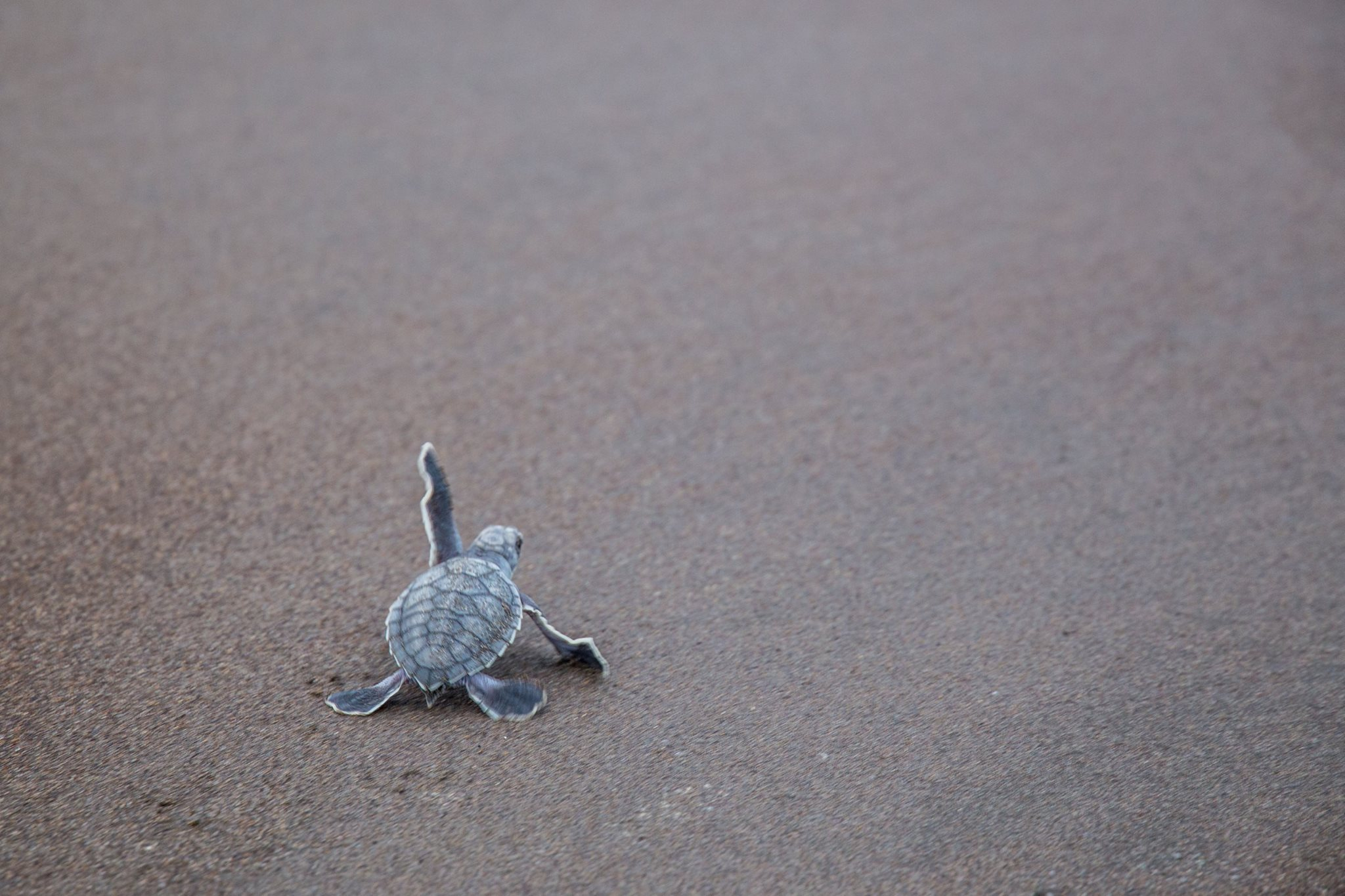 observation-tortues-dominique-voyage