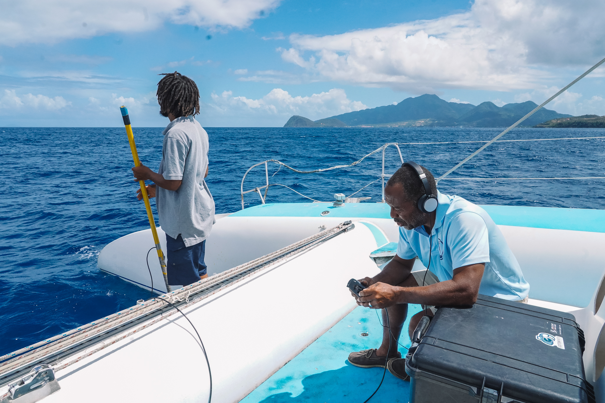 whale-watching-dominica-cachalots