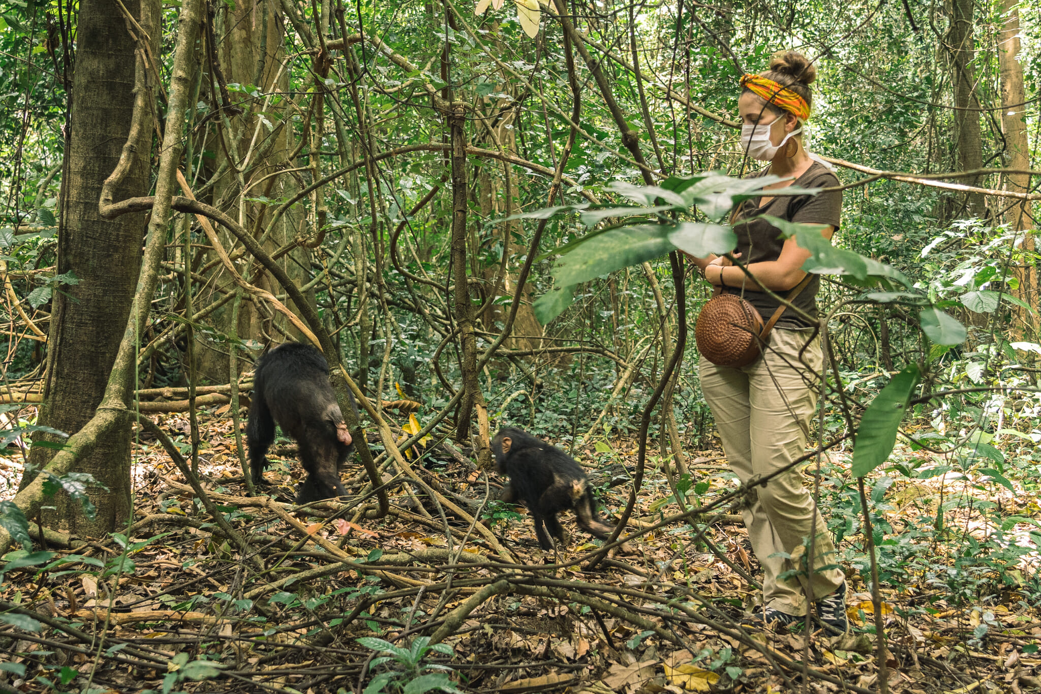 parc-gombe-tanzanie-chimpanzé