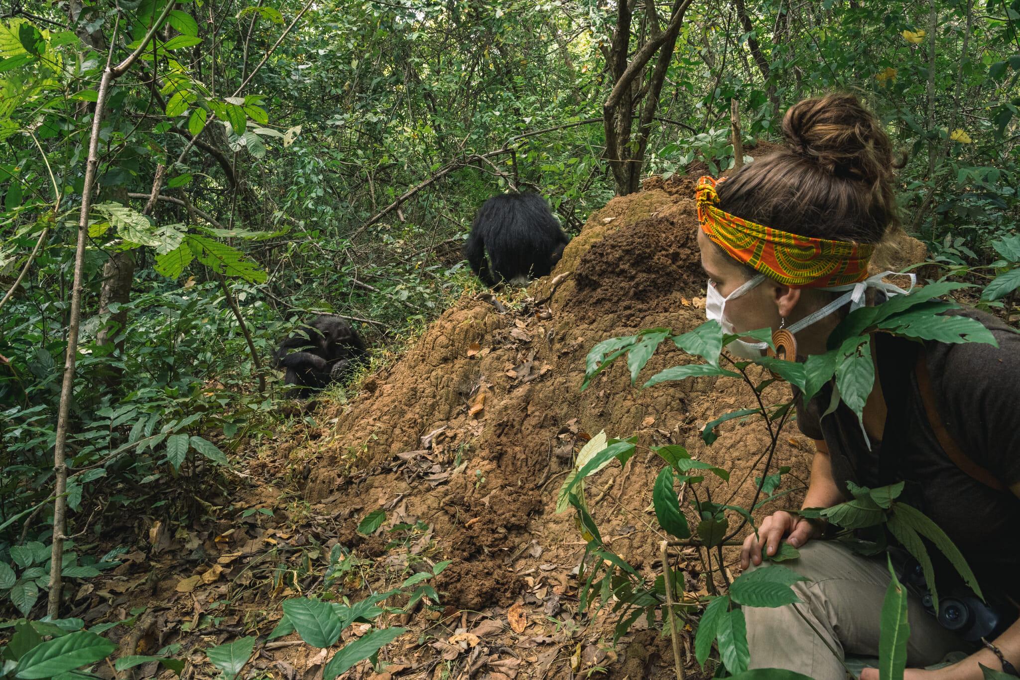 voyager-en-tanzanie-parc-gombe-chimpanzé