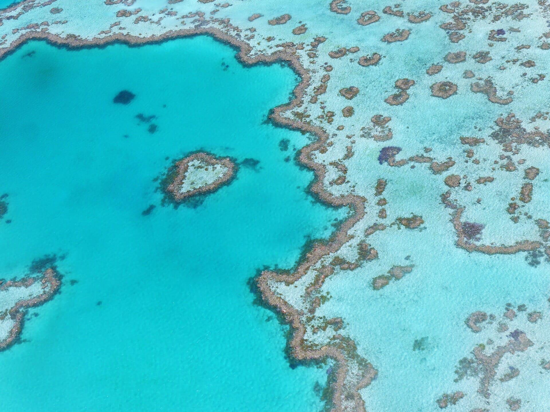 coeur-corail-barrière