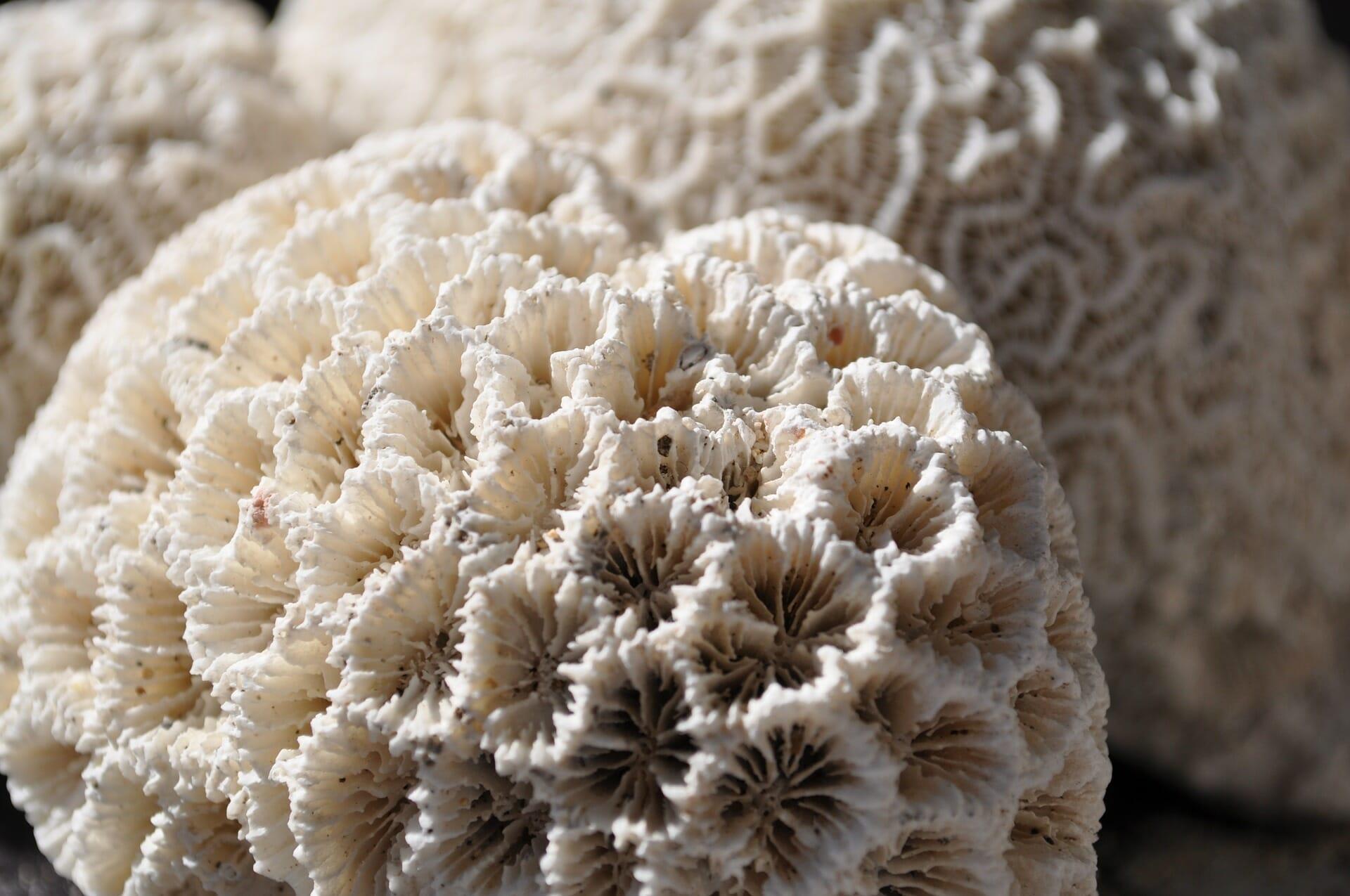 corail-mort-creme-solaires