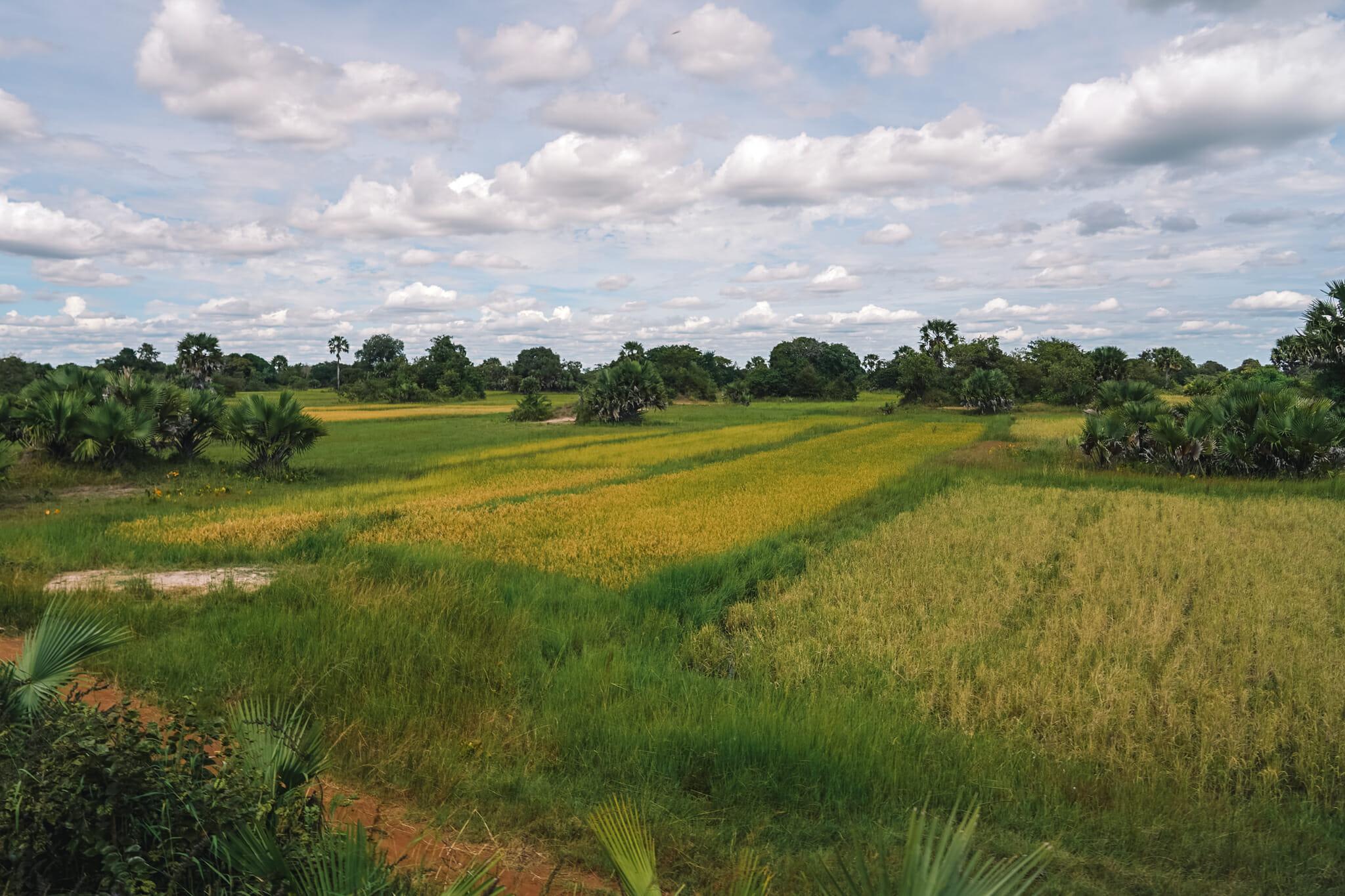train-tanzanie-voyage-rizières