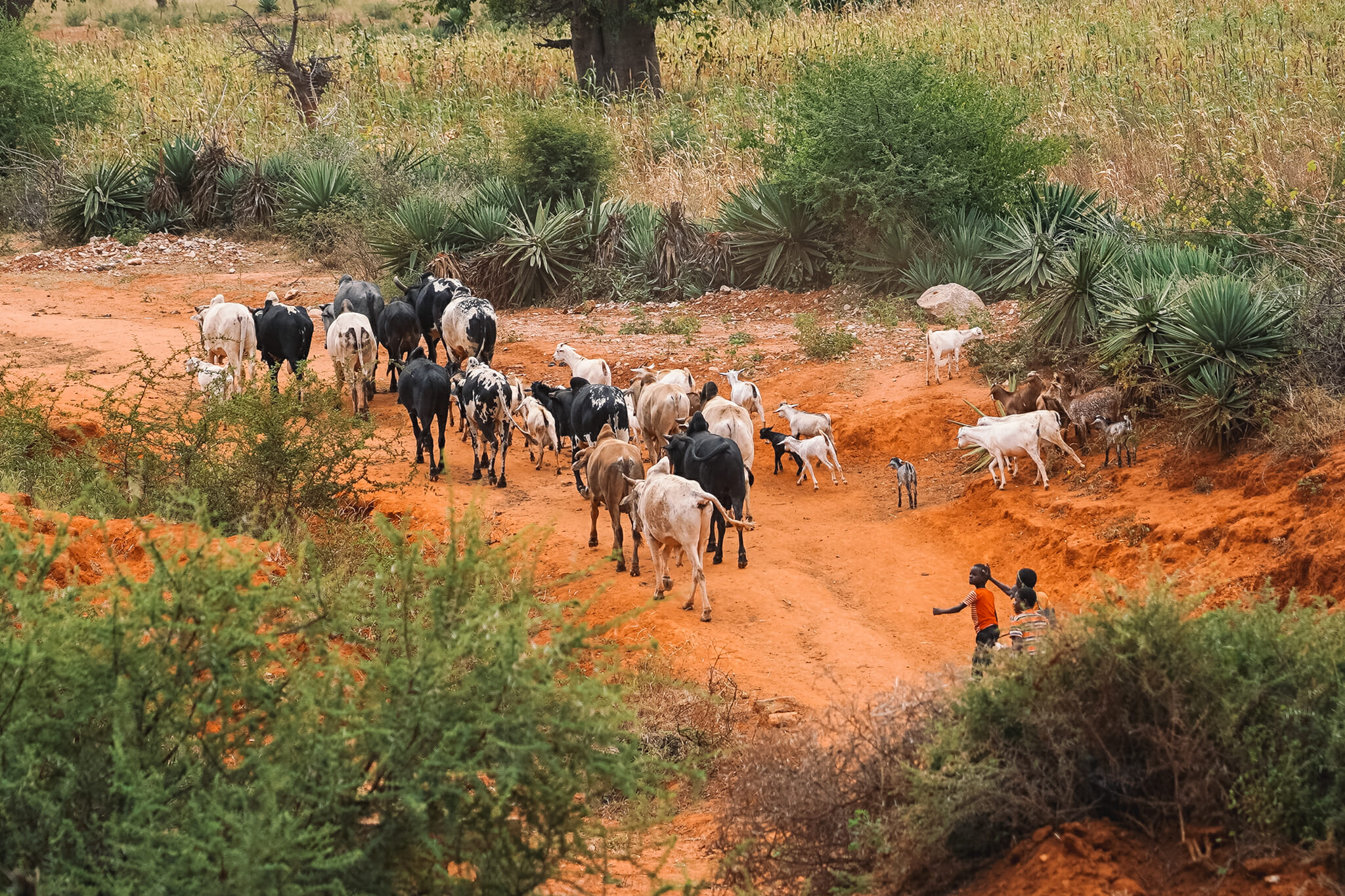 train-voyage-tanzanie-locaux-eleveurs