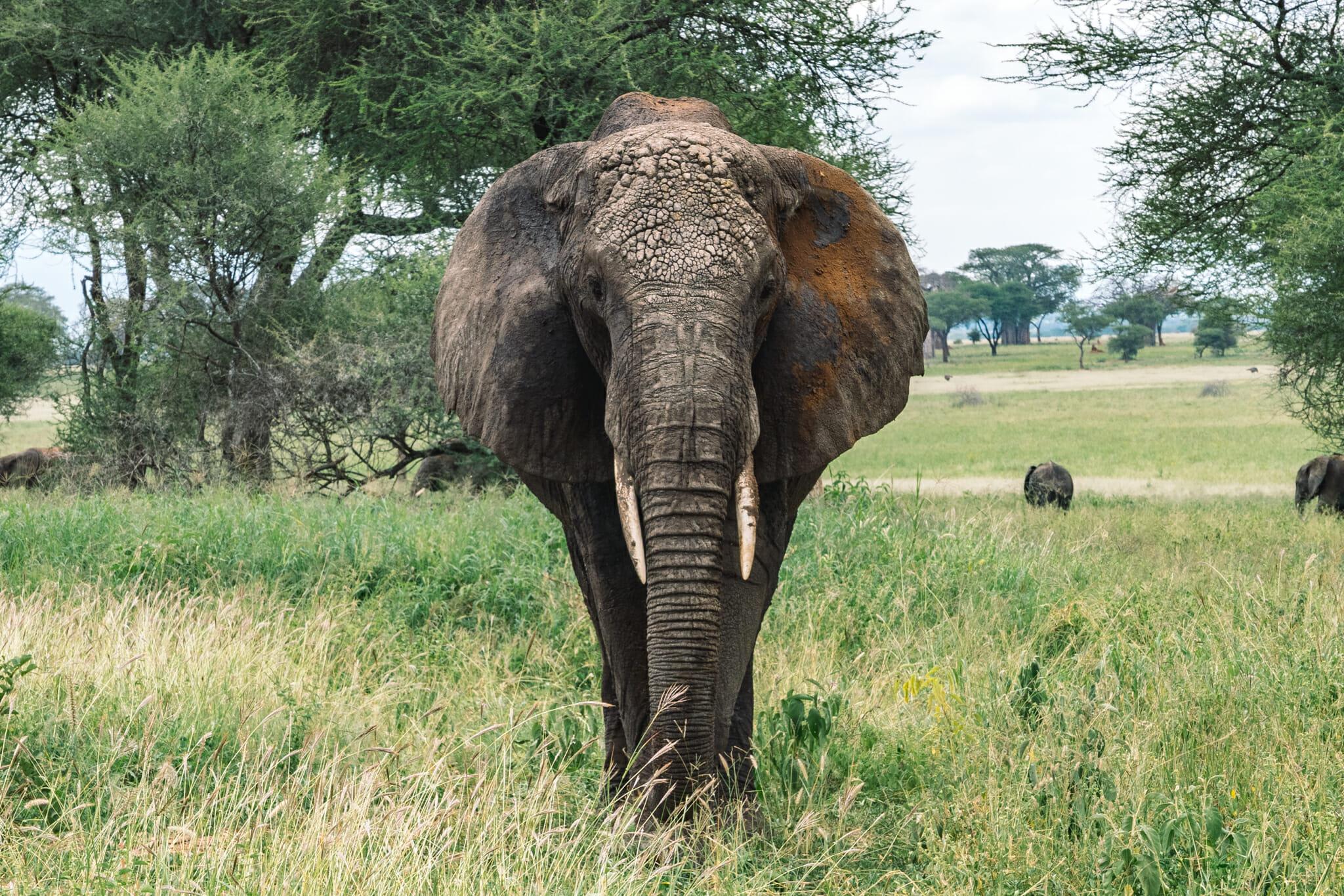voyage-tanzanie-parc-safari-tarangire-elephant