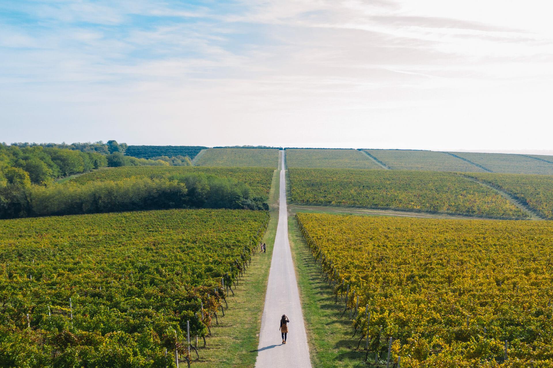 croatie-visite-road-wine-slavonia