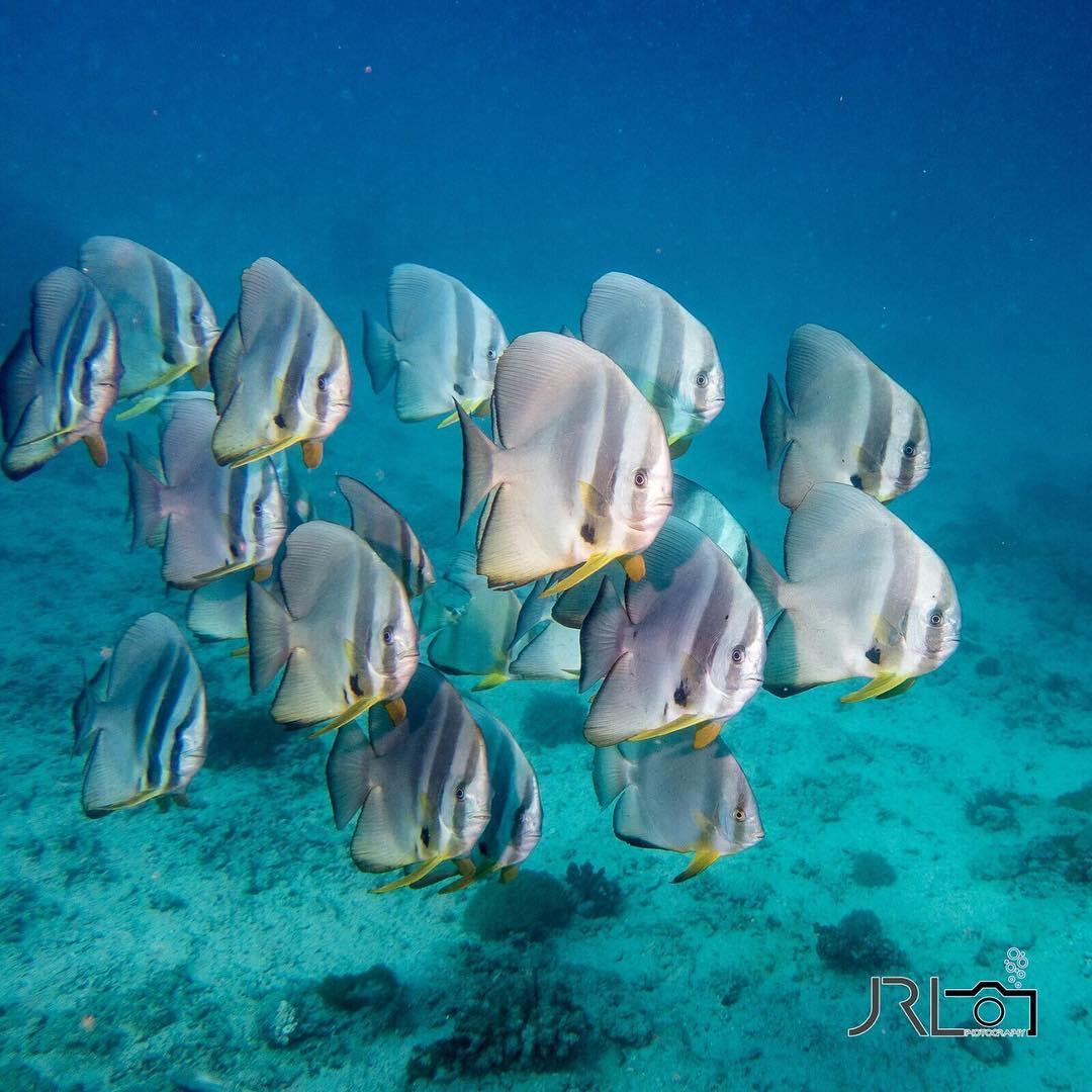 zanzibar-plongée