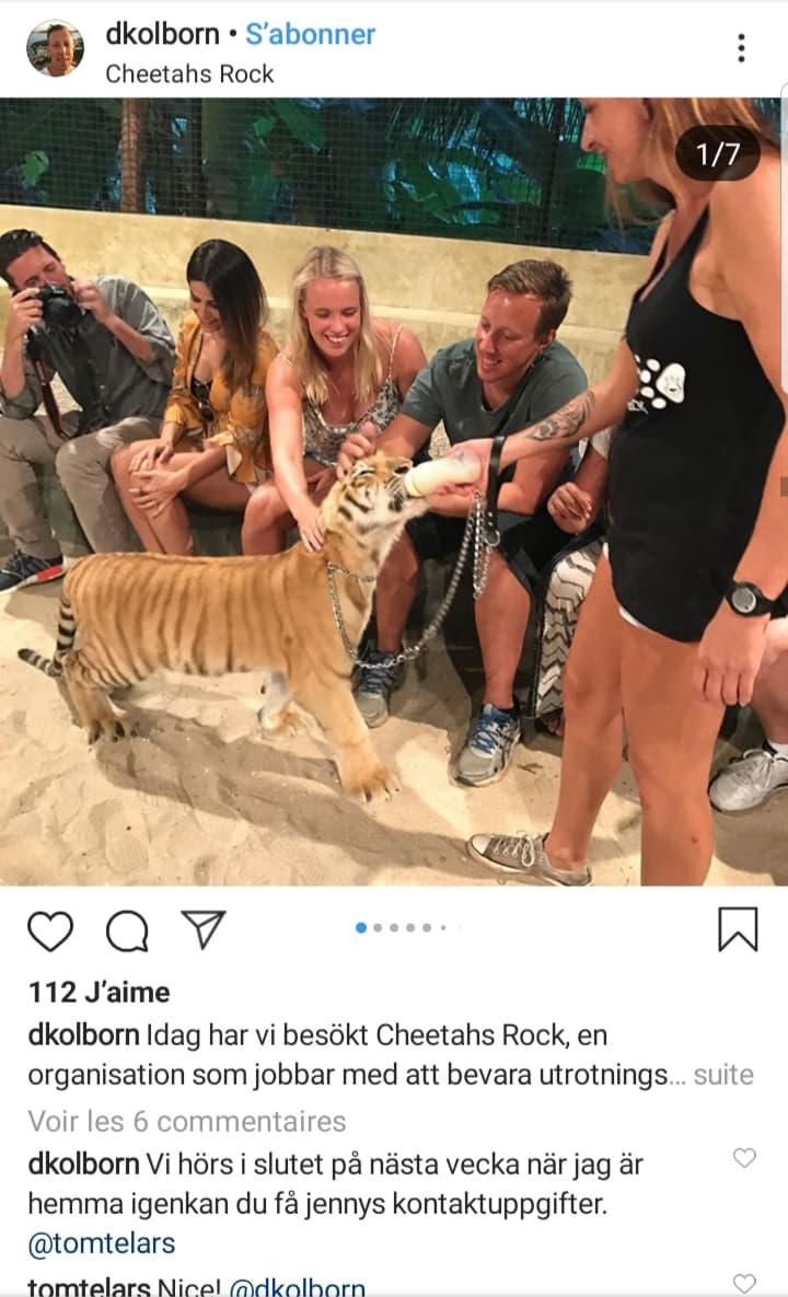 cheetah-rock-tanzanie-zanzibar