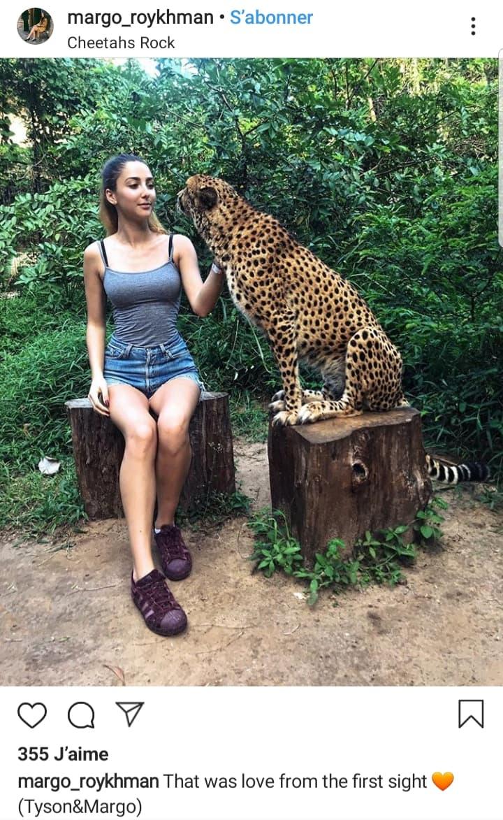 cheetah-rock-zanzibar-tanzanie