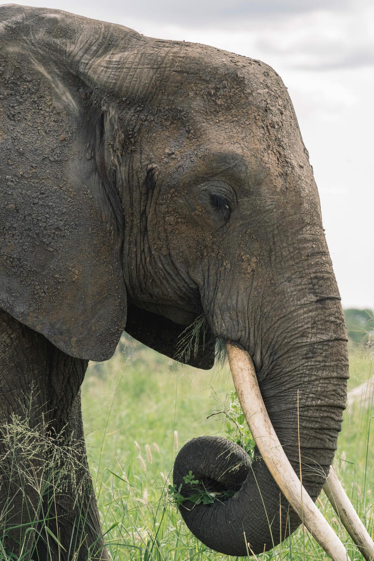 faire-safari-tanzanie-tarangire