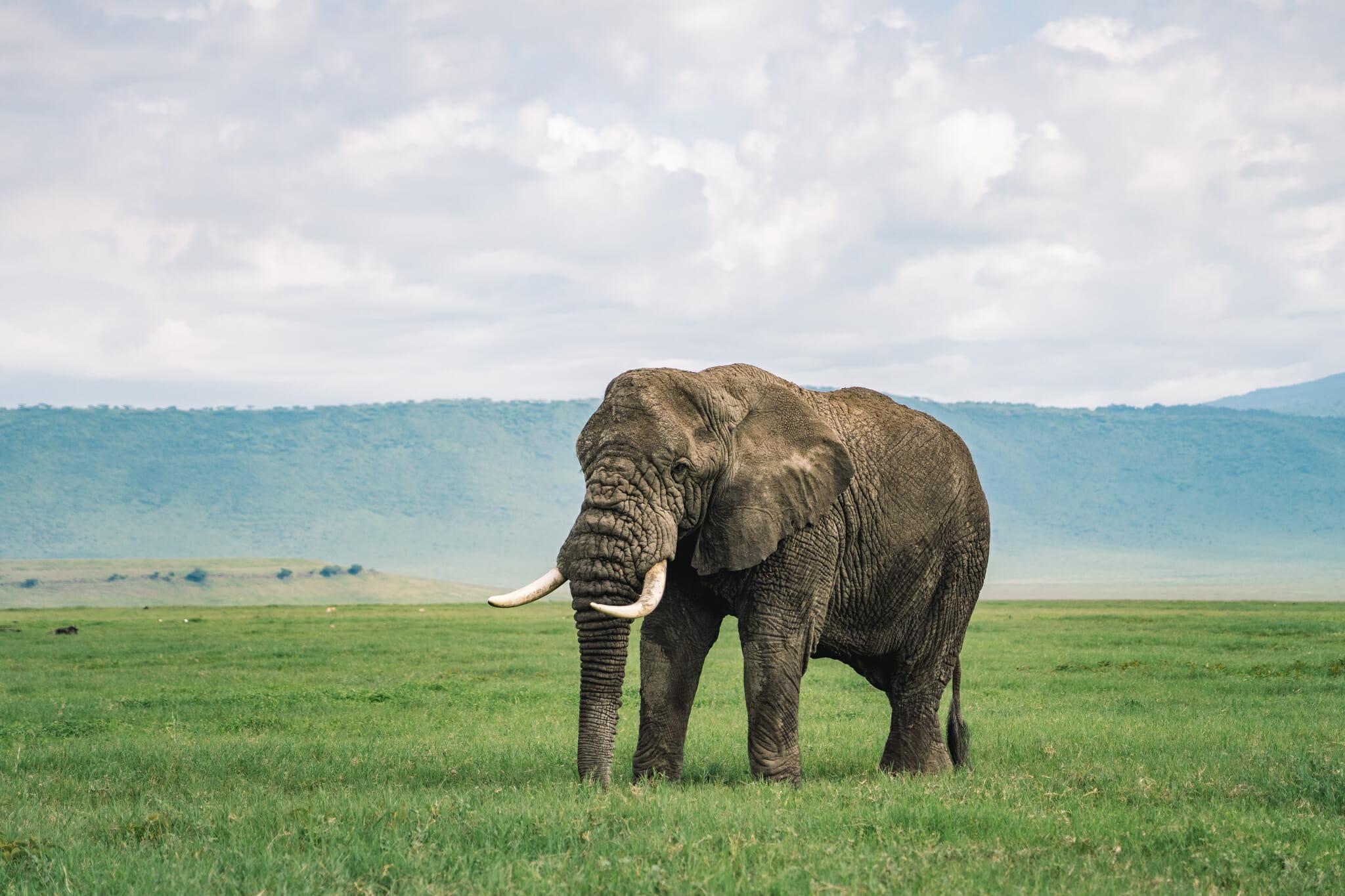 Observation d'un éléphant dans le parc du Ngorongoro en tanzanie