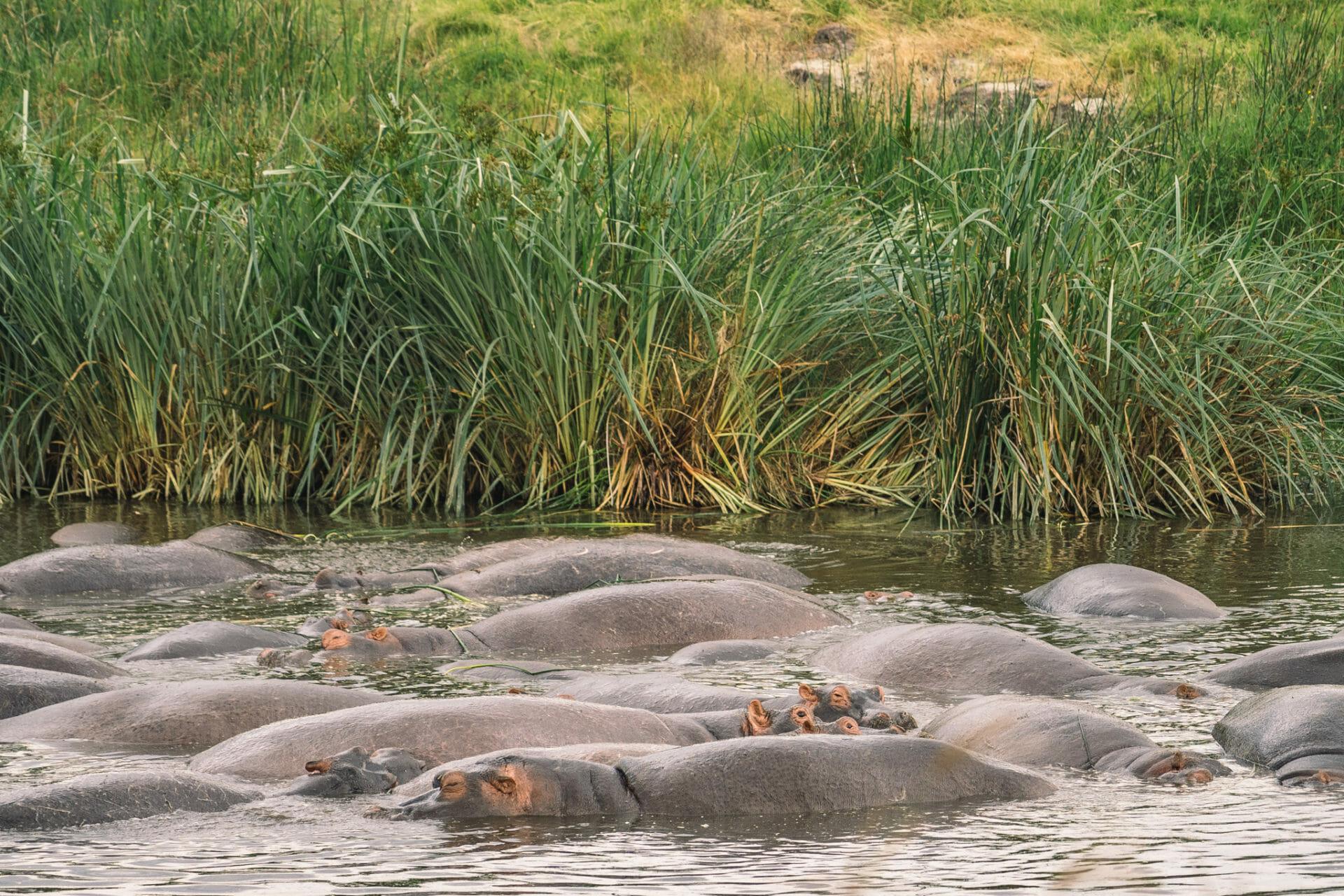 ngorongoro-tanzanie-safari