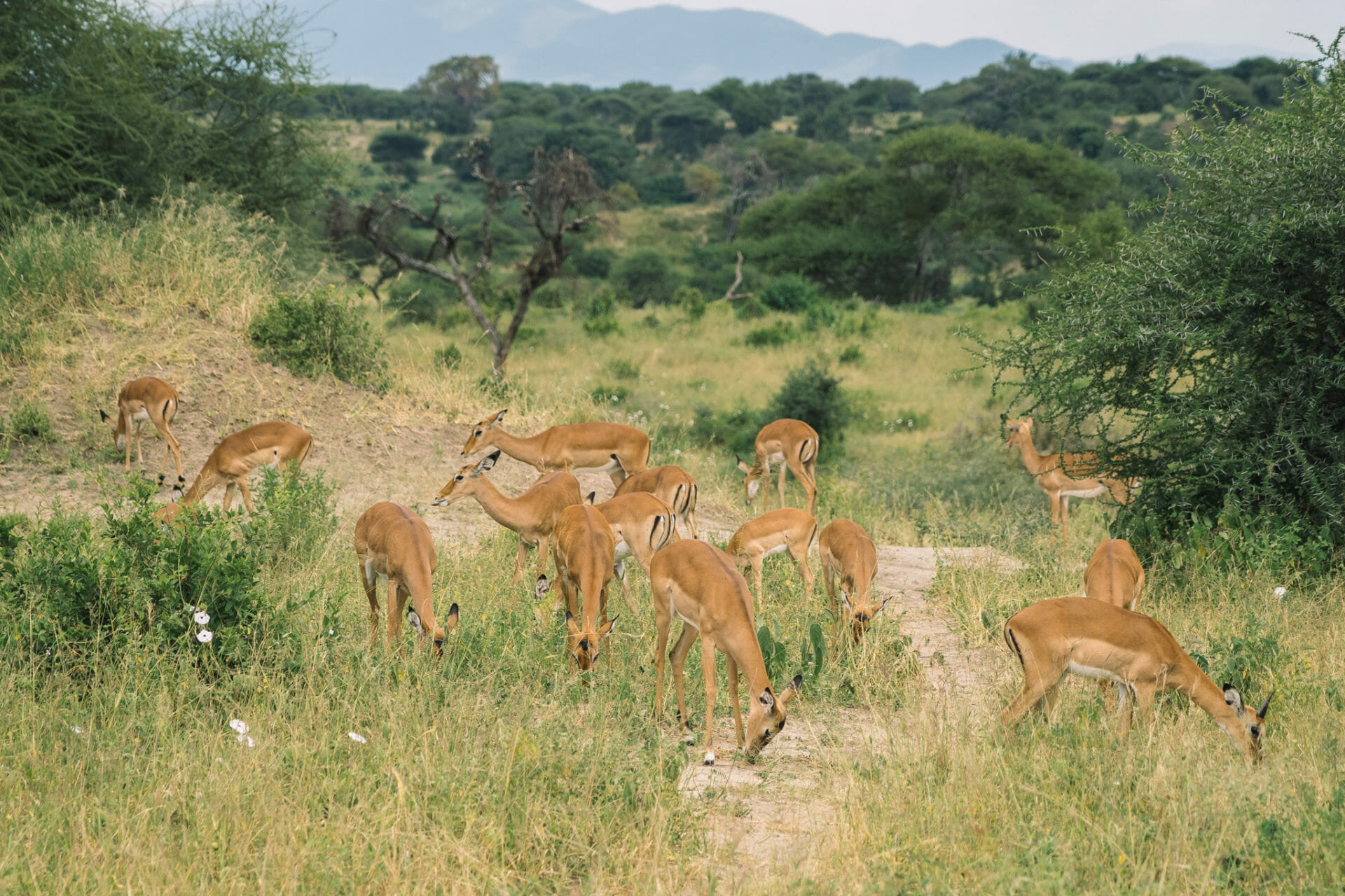 parc-national-tarangire-tanzanie