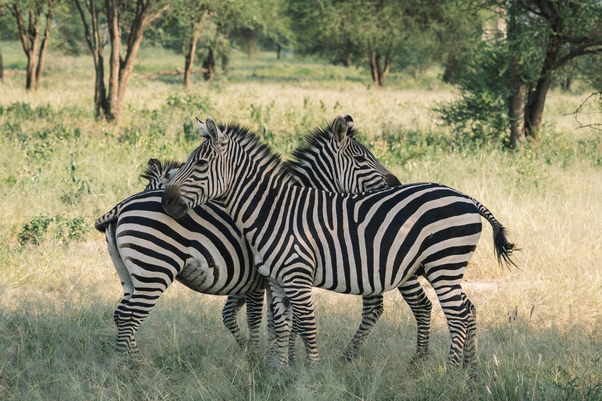 parc-tarangire-safari