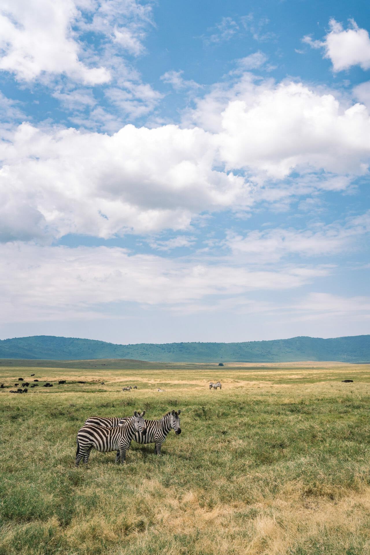 safari-ngorongoro-tanzanie