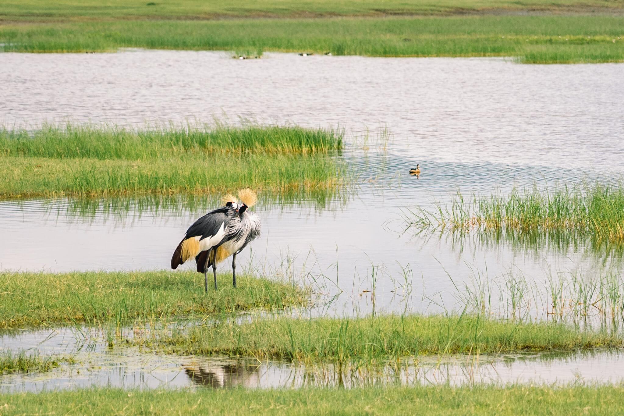 oiseau dans le cratère du ngorongoro
