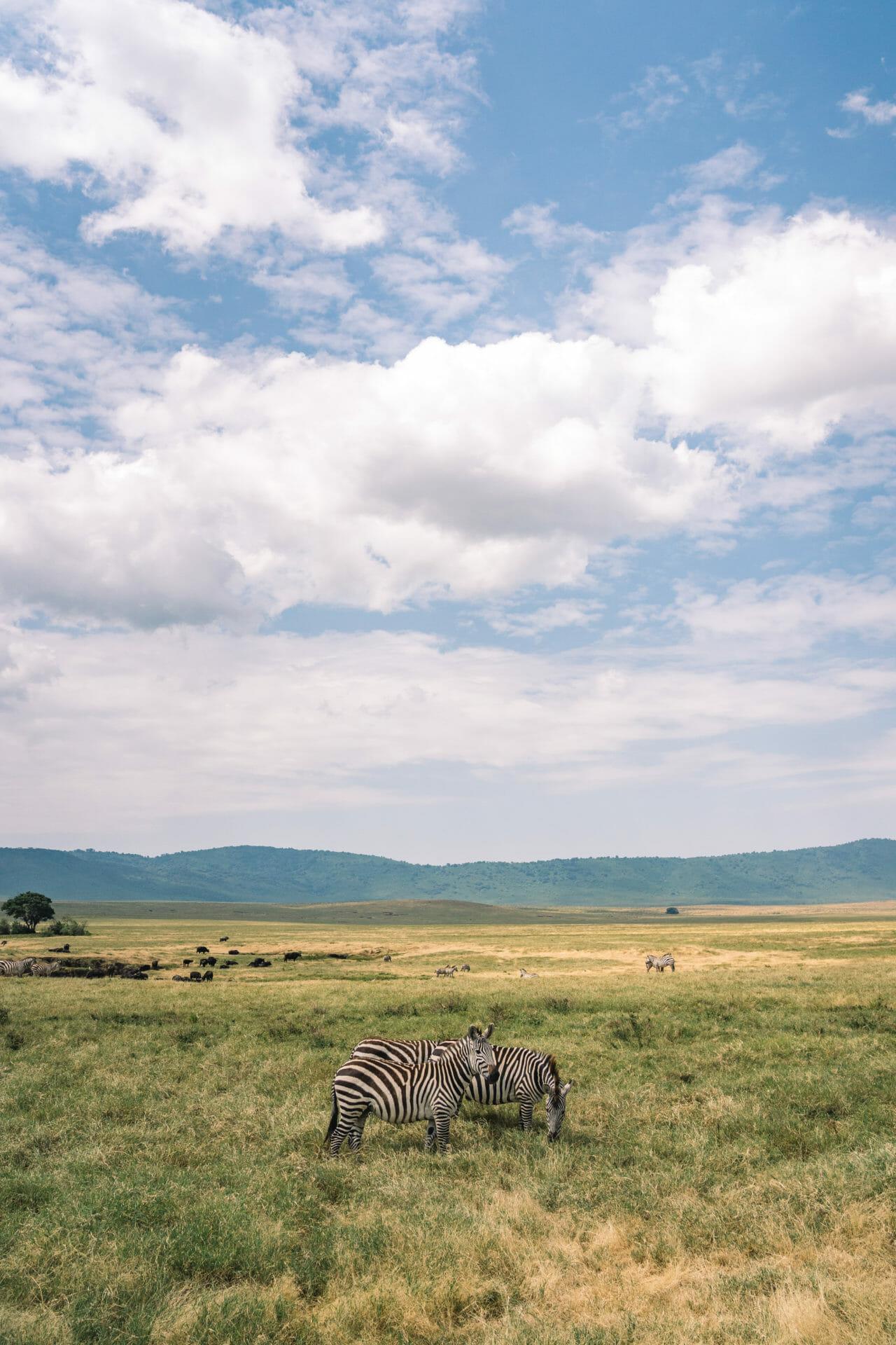 safari-tanzanie-ngorongoro