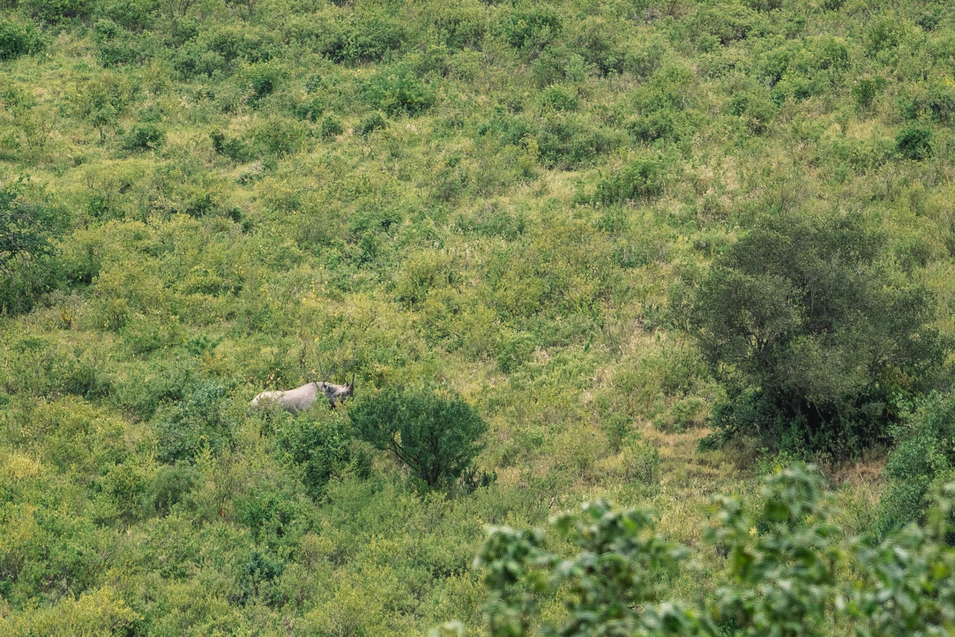 tanzanie-safari-ngorongoro