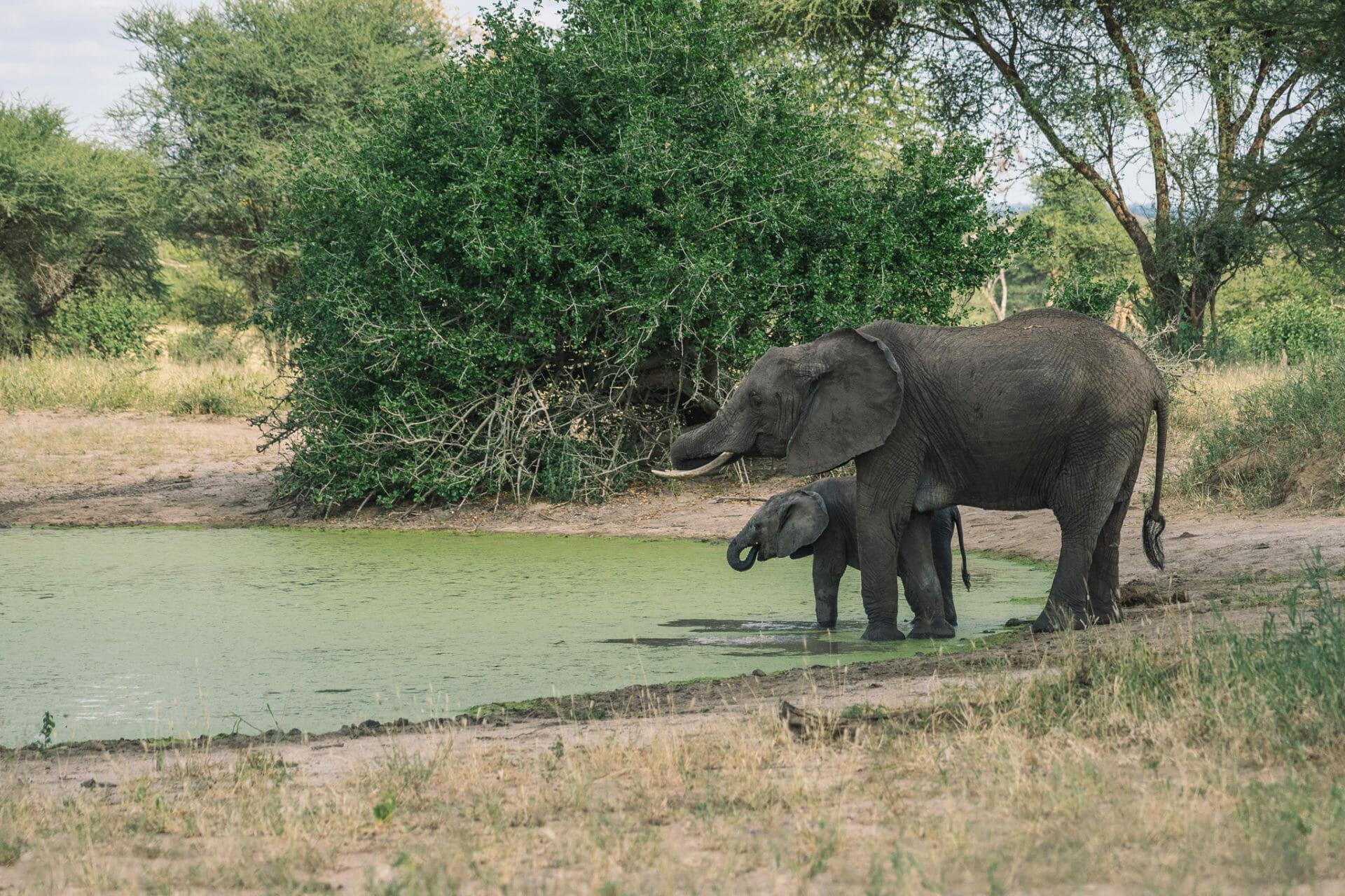 tanzanie-tarangire-safari
