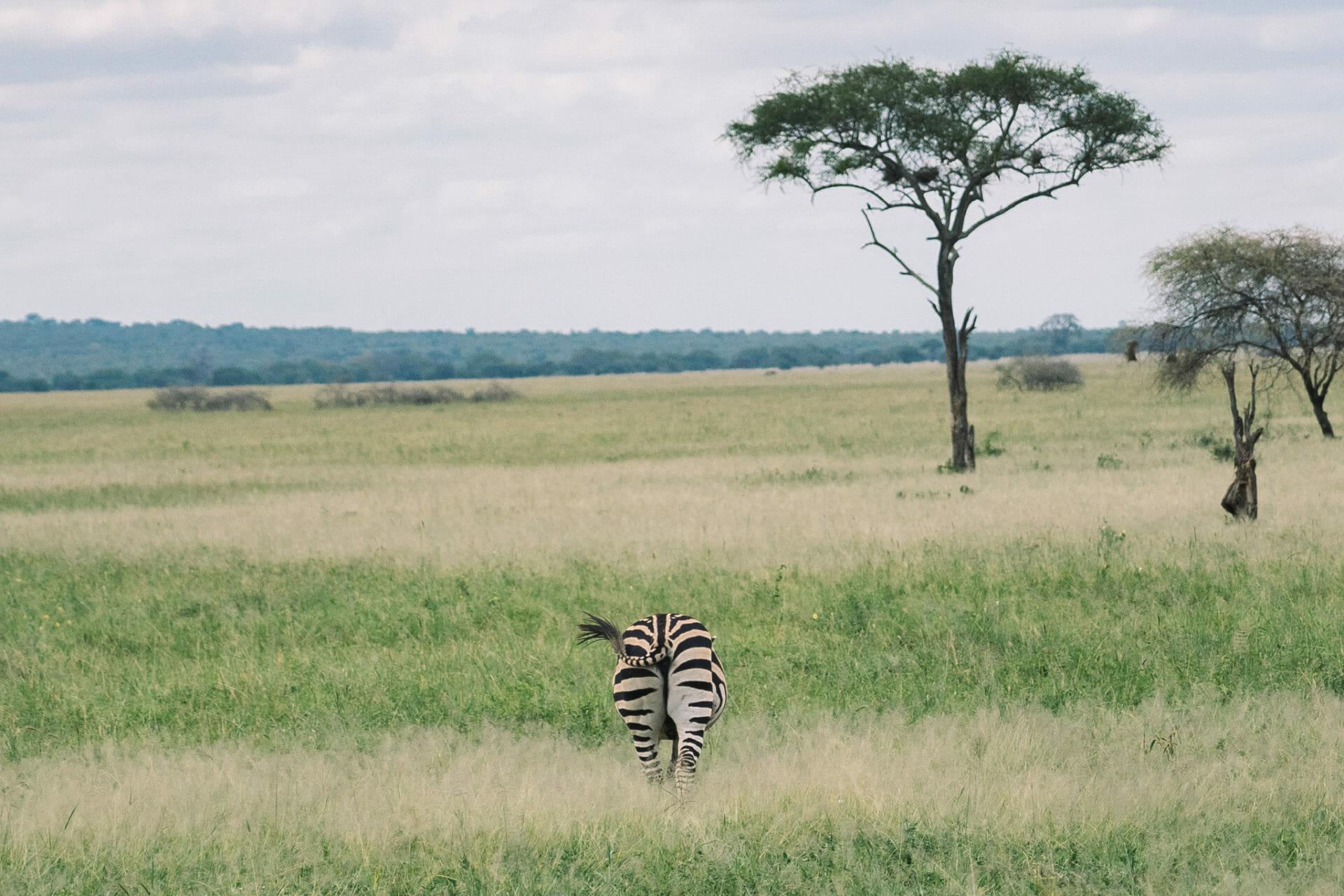 tarangire-safari-tanzanie