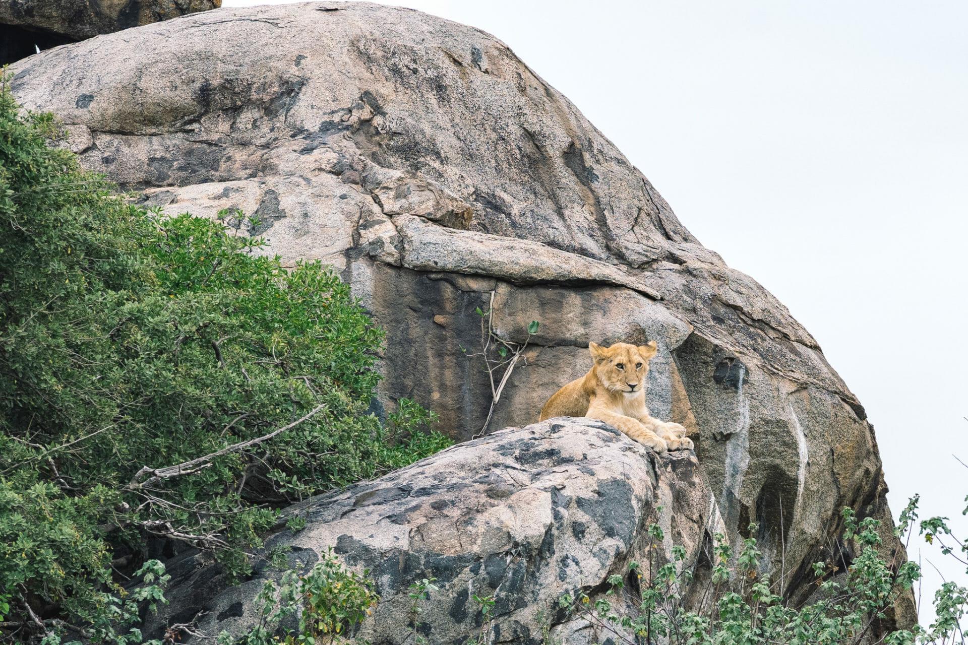 faire-safari-tanzanie-serengeti