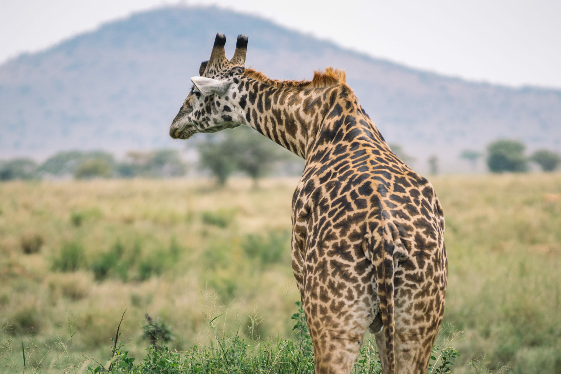faire-un-safari-serengeti