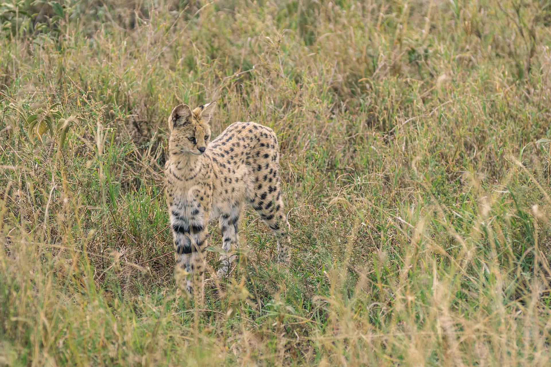 parc-national-serengeti-tanzanie
