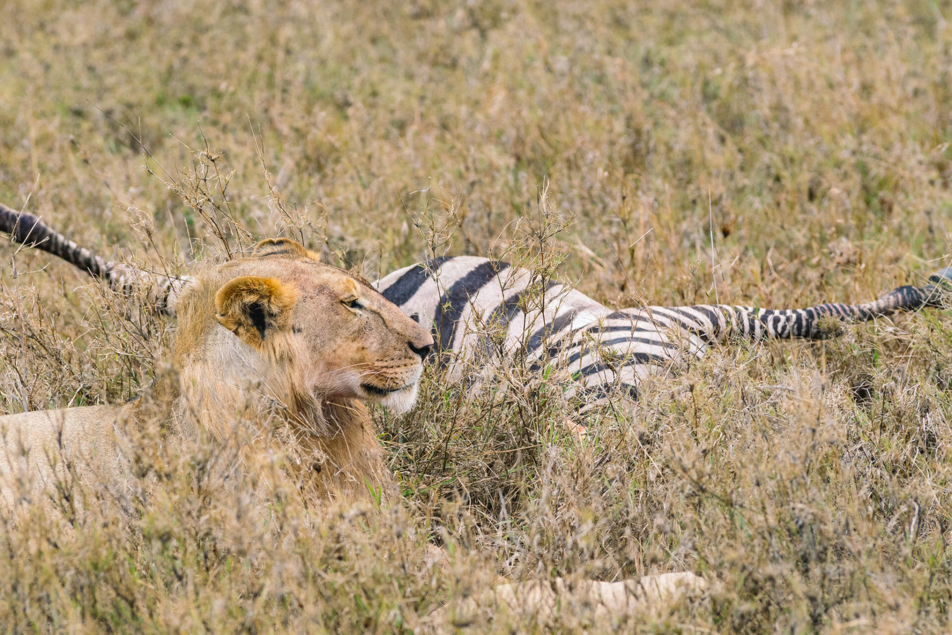 safari-serengeti-tanzanie