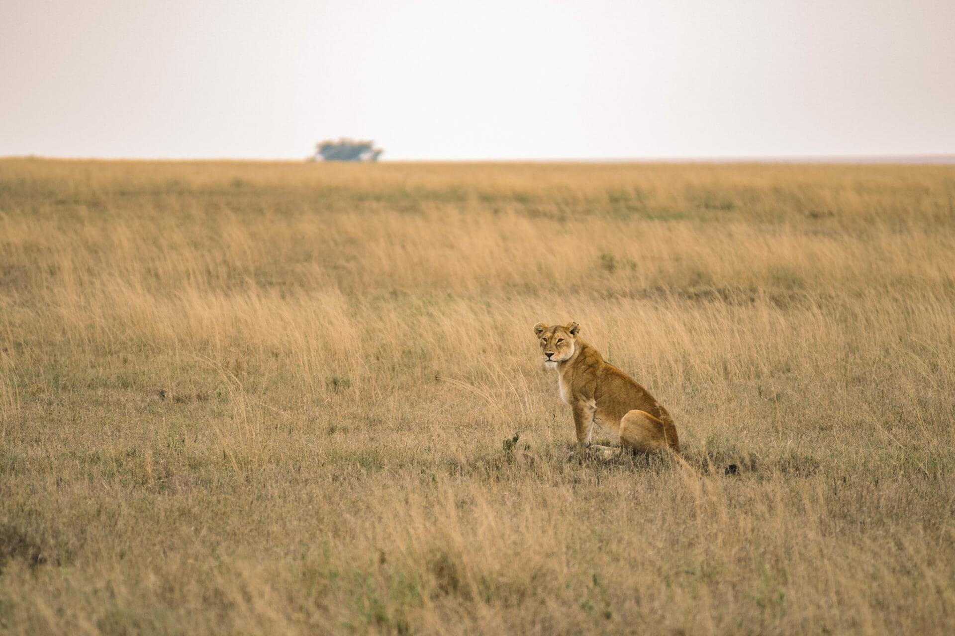 safari-tanzanie-parc-serengeti
