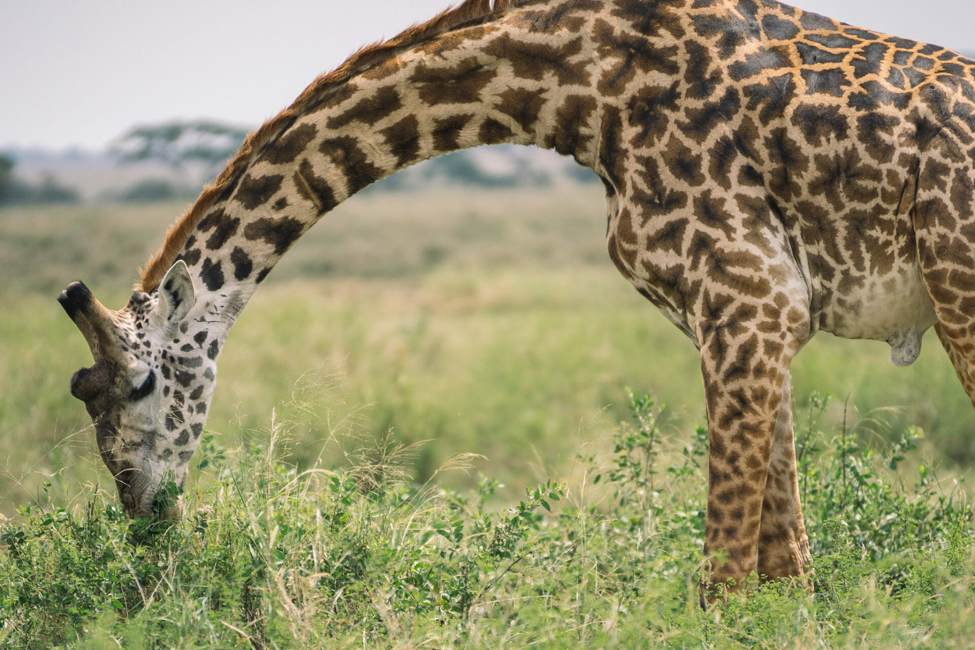 safari-tanzanie-serengeti