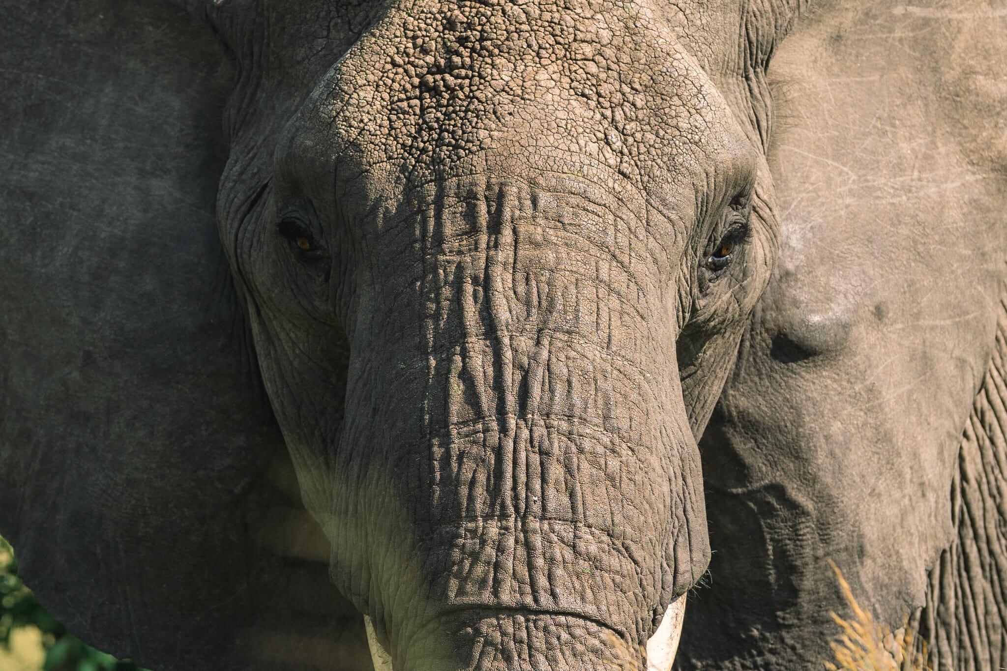 Observation d'un éléphant dans le parc national du serengeti en Tanzanie