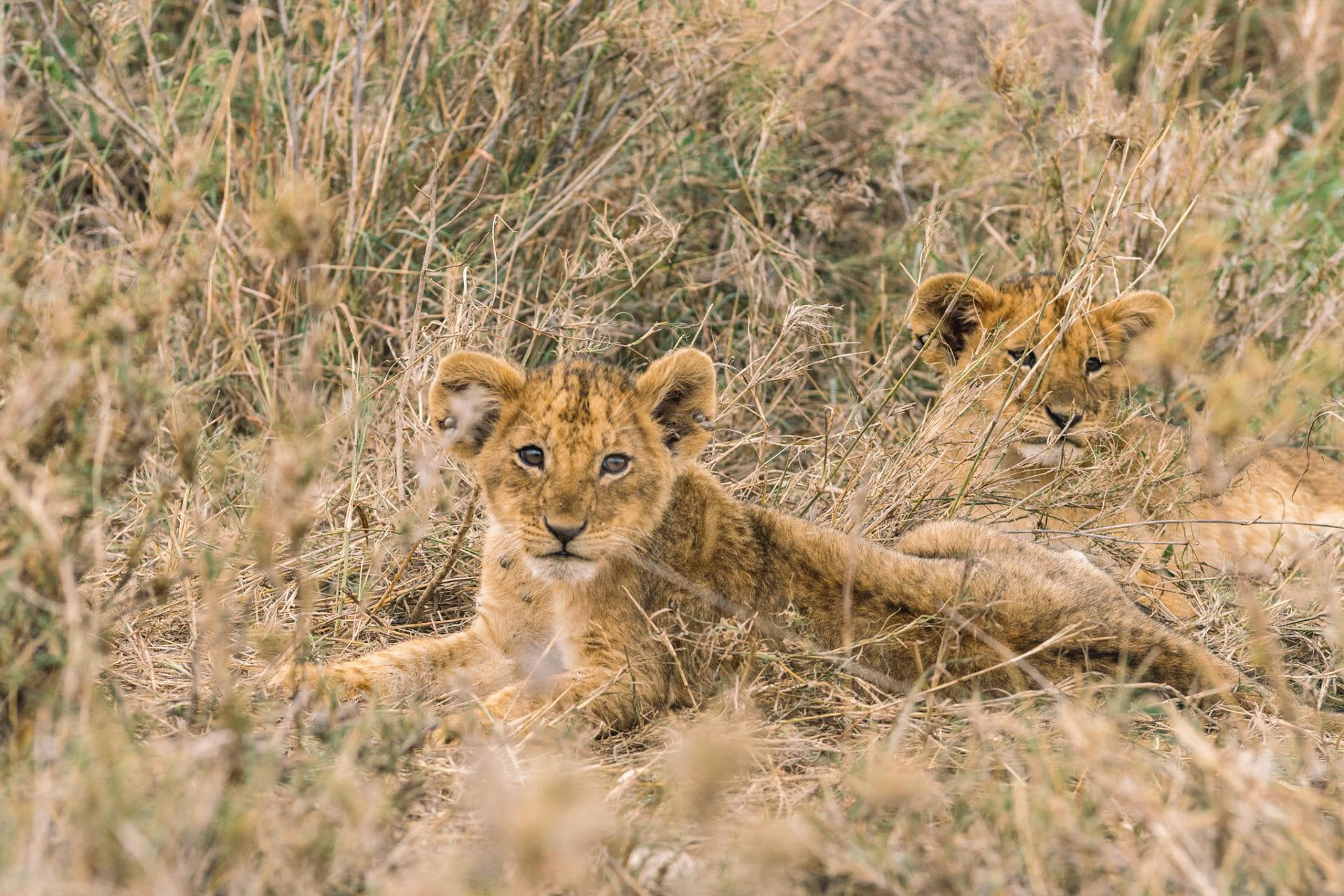 seregenti-tanzanie-safari-parc