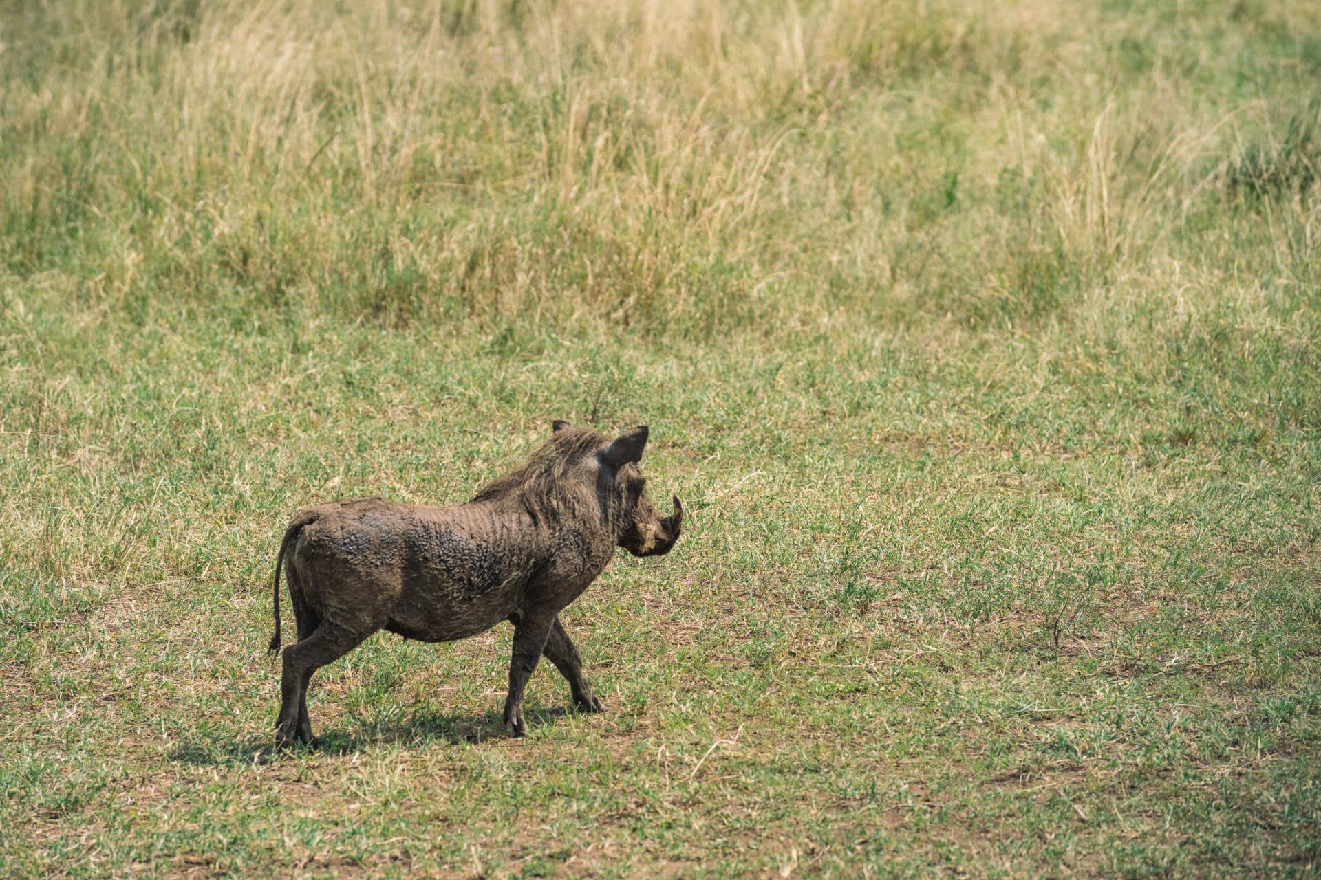 serengeti-safari-tanzanie