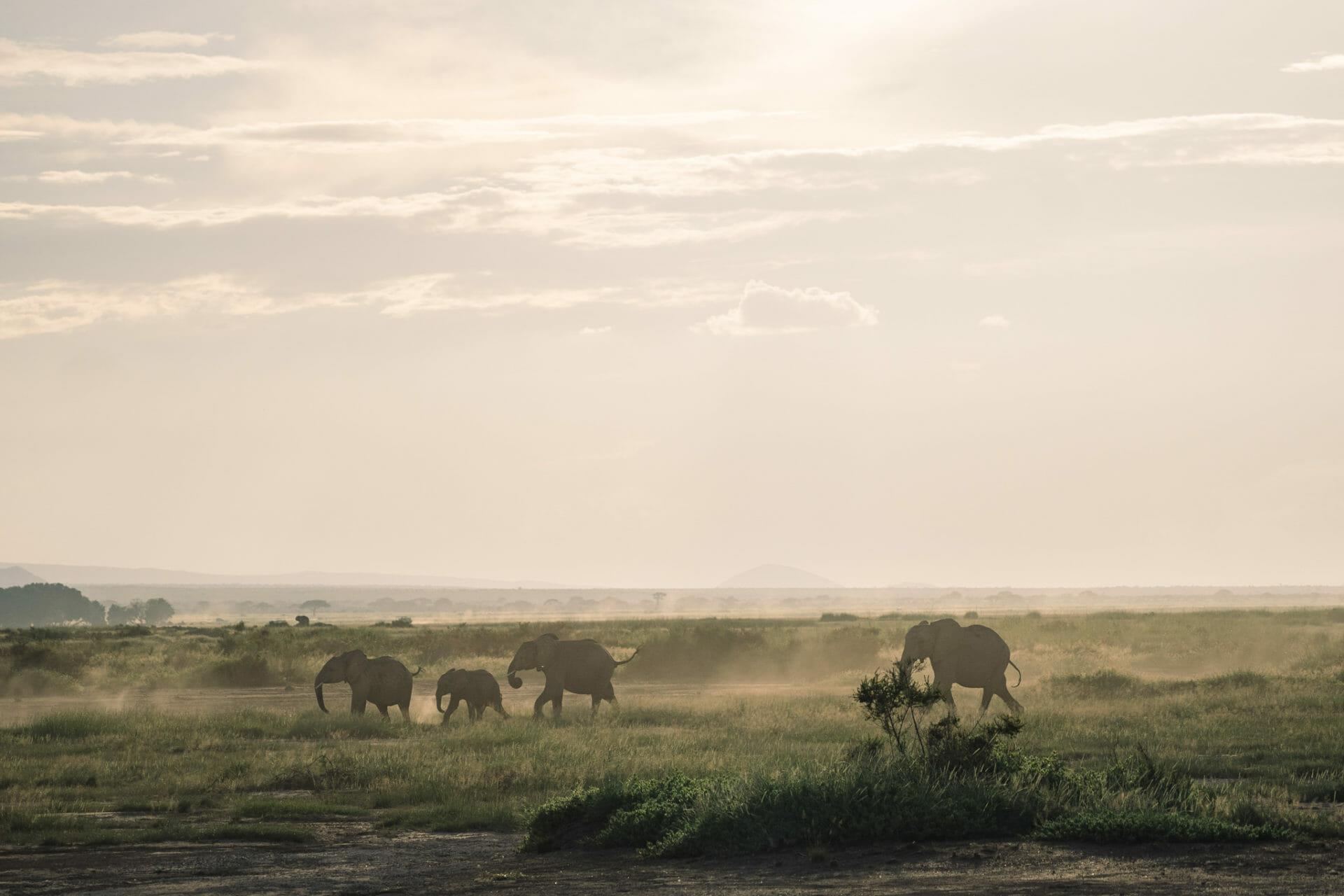 kenya-parc-amboseli-safari-elephant