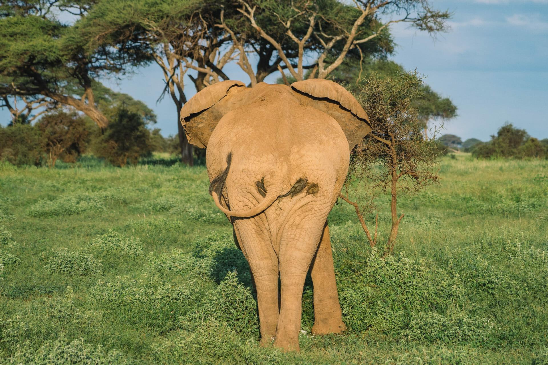 parc-amboseli-kenya-elephant-safari