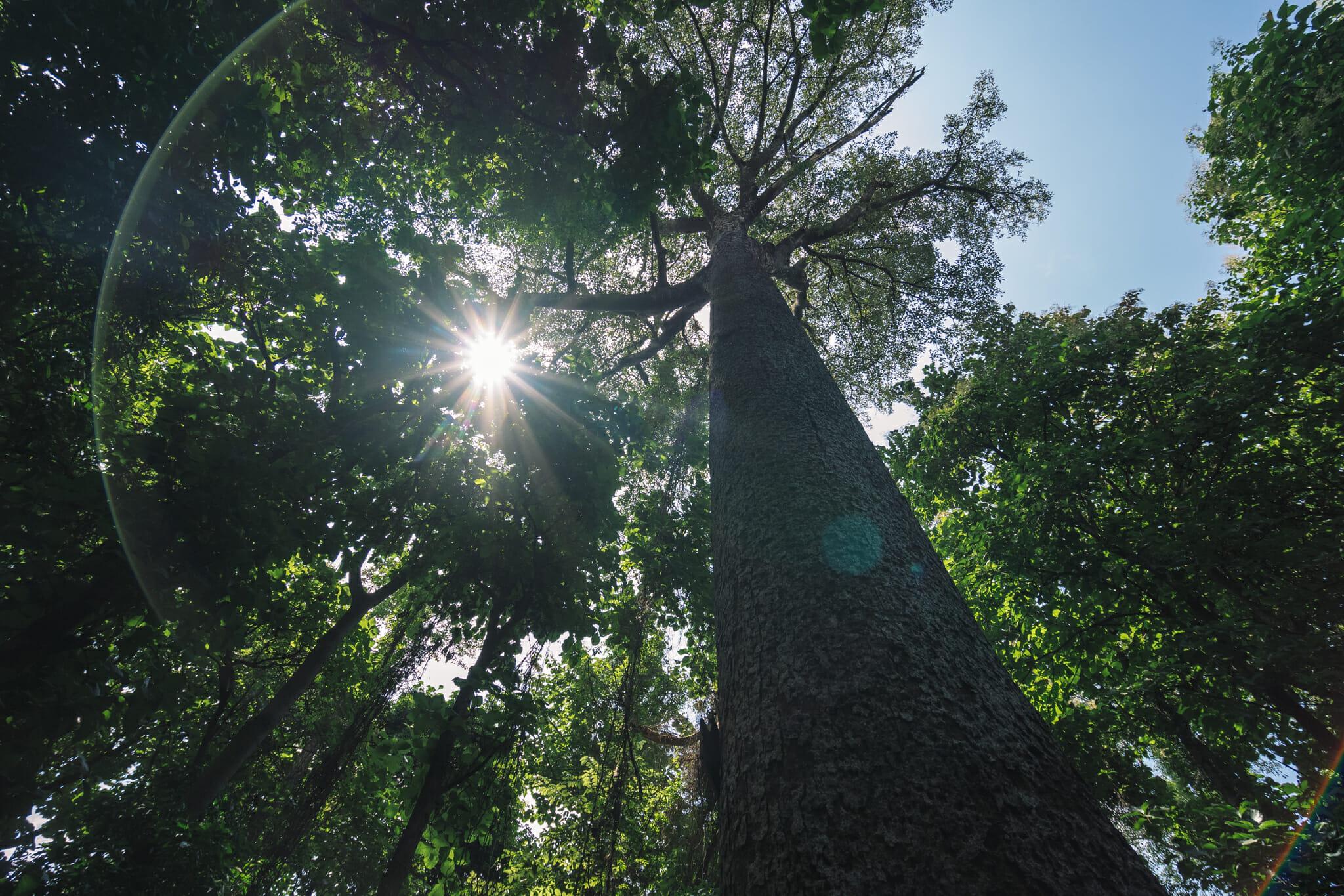 Au coeur de la nature dans la forêt de Rau en Tanzanie