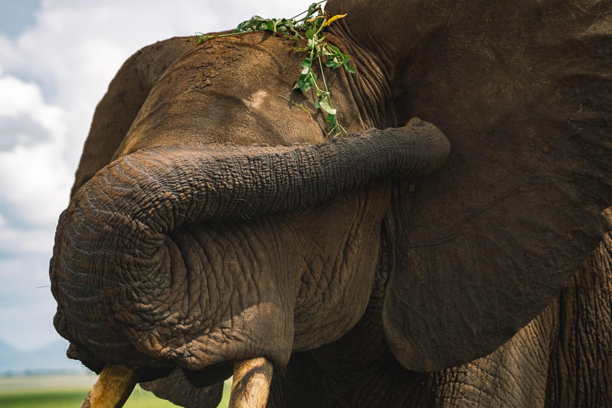 Observation des éléphants dans le parc du Tarangire en Tanzanie