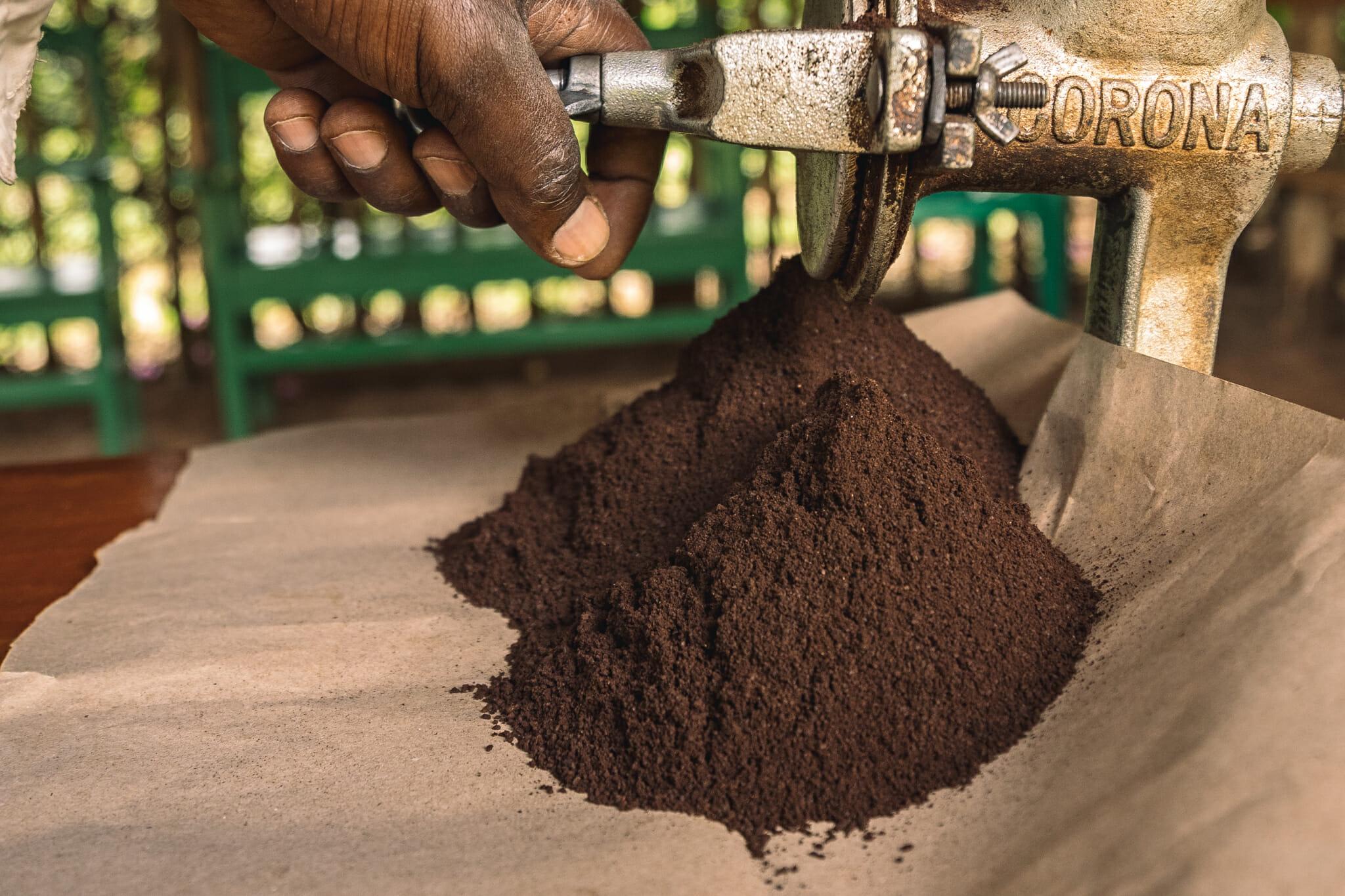 Découverte de la production de café en Tanzanie