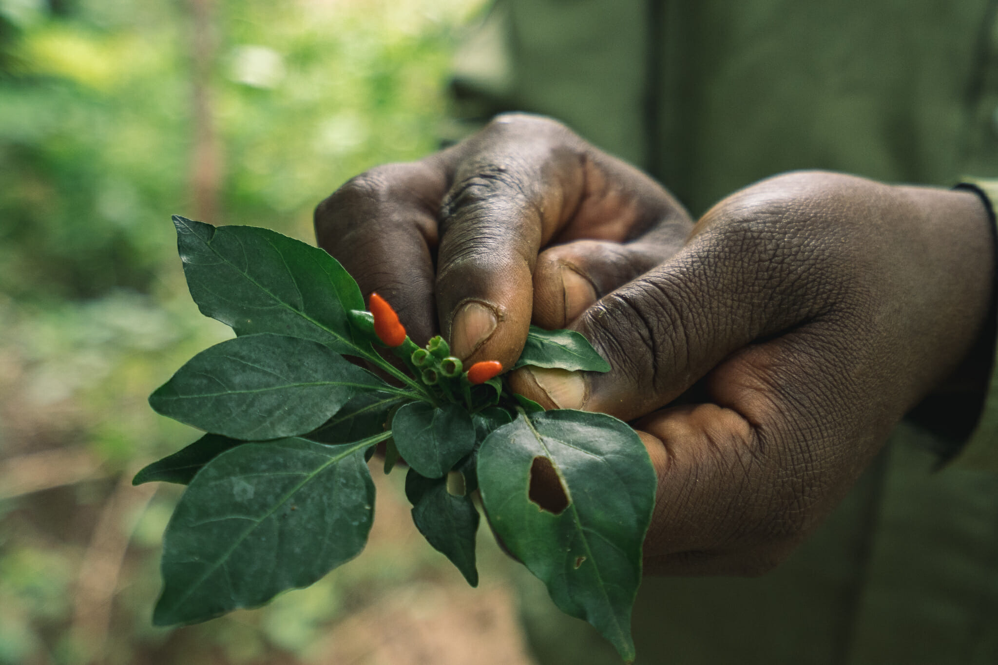 Découverte des plantes lors de l'immersion dans le village d'Endallah en Tanzanie