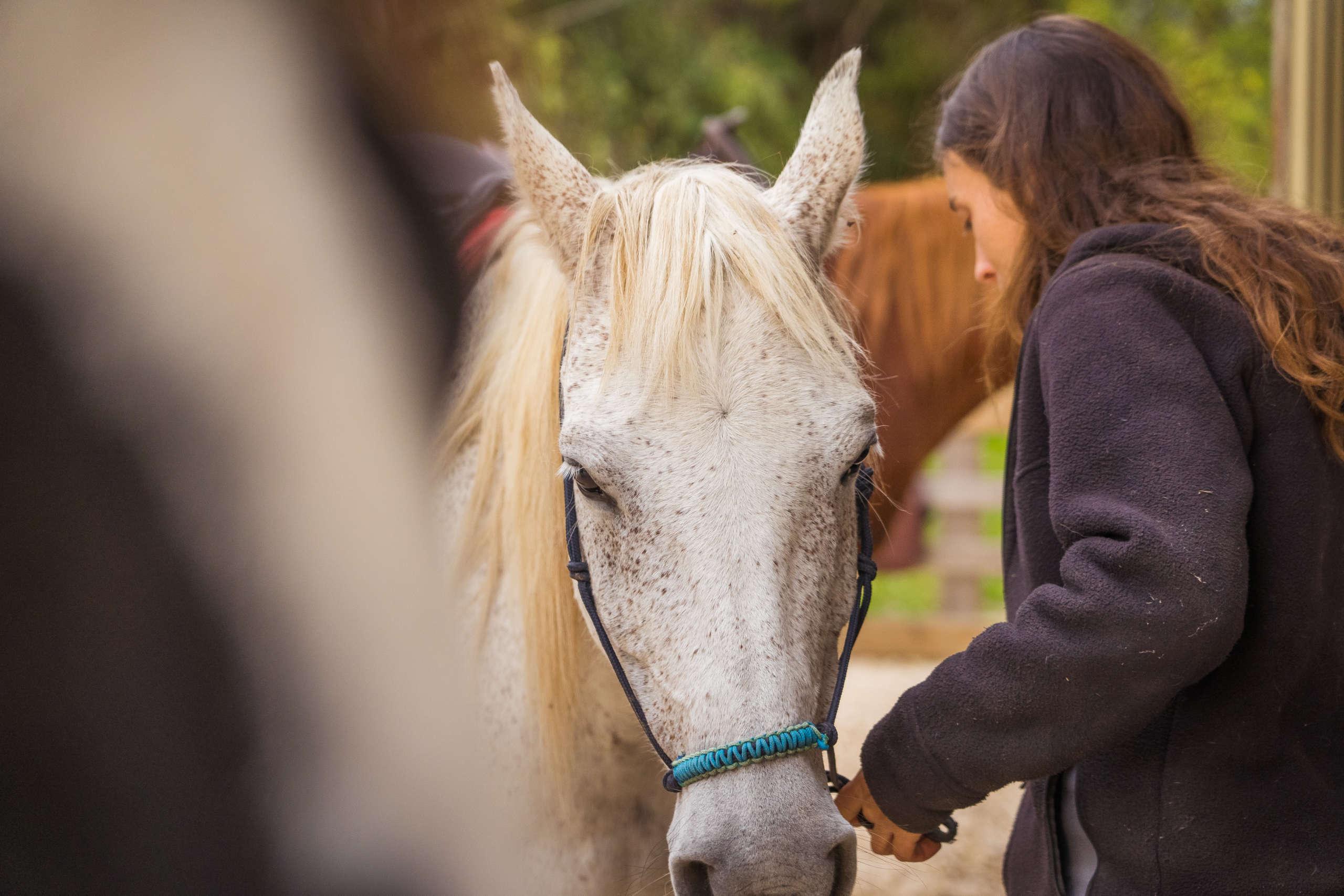 Rencontre avec Anne, éleveuse de chevaux dans le périgord noir