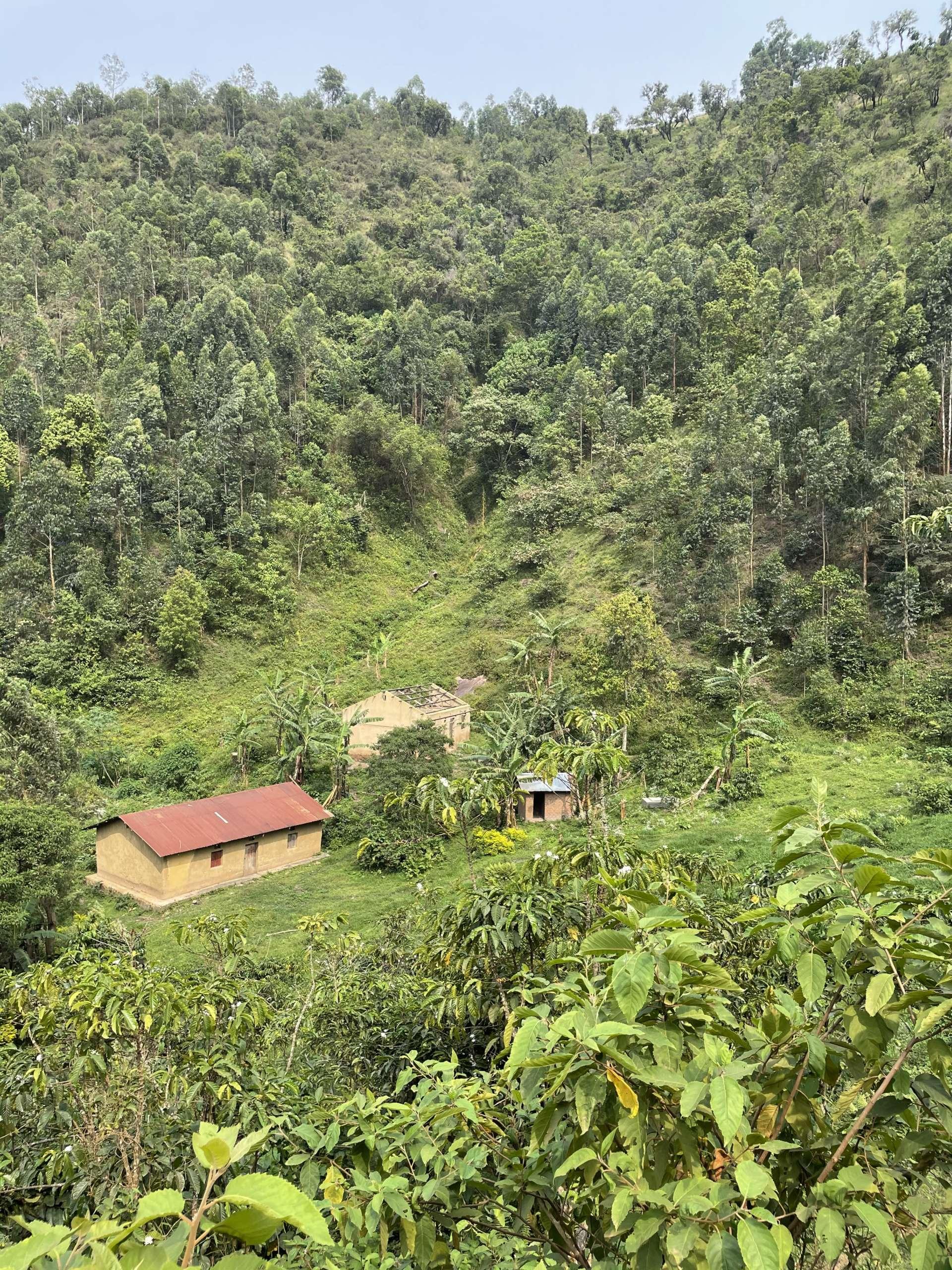 vue sur les paysages ougandais