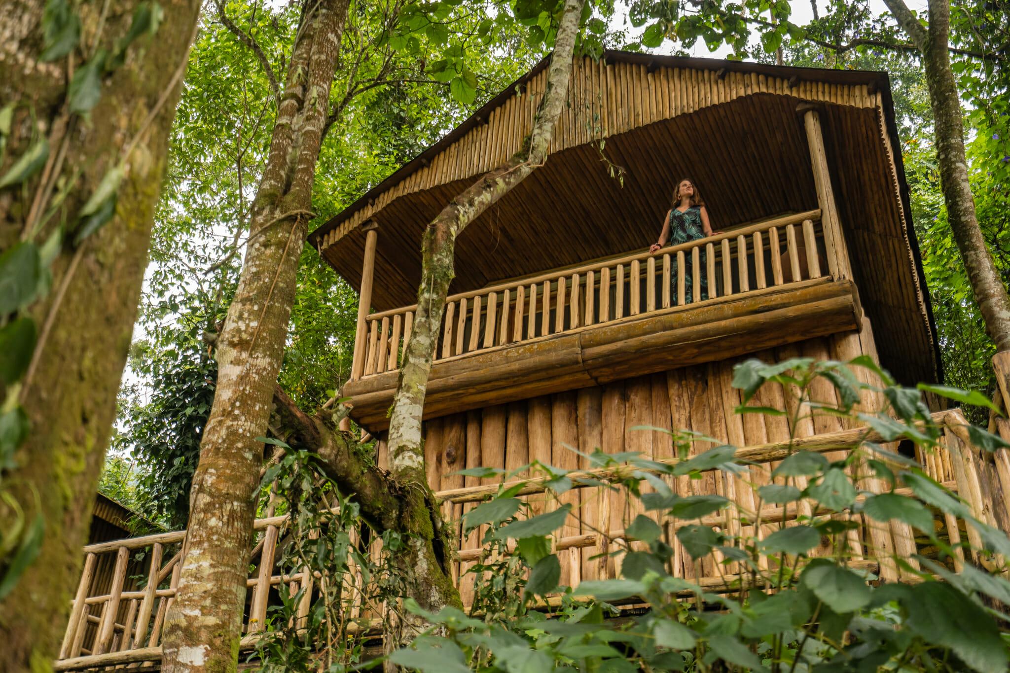 cabane en plein coeur de la forêt de bwindi en ouganda