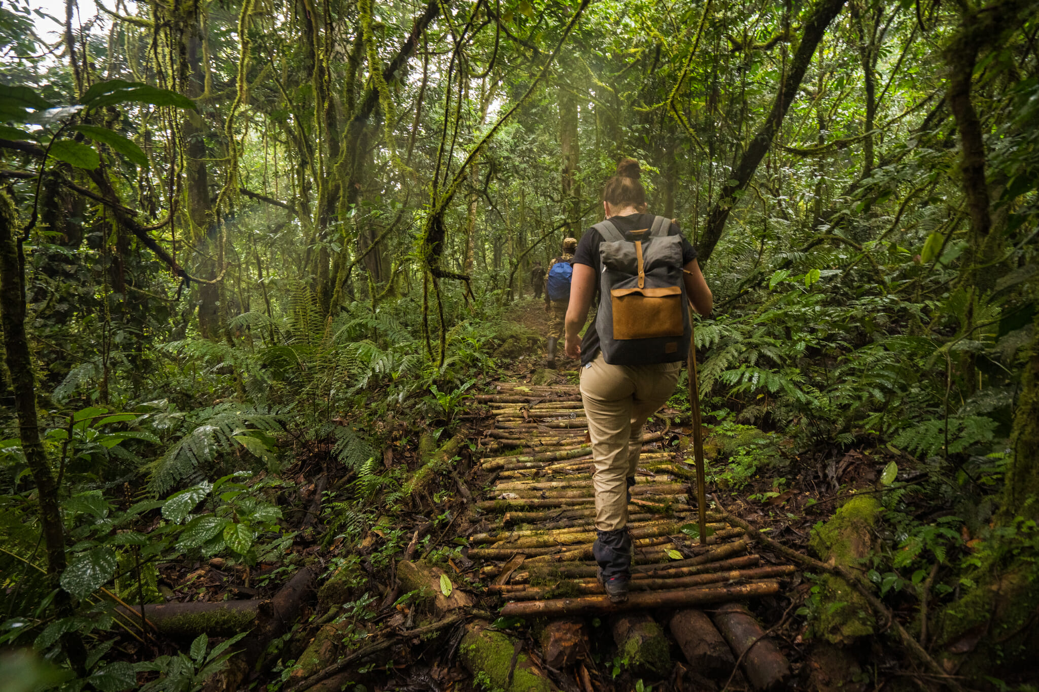 début du trekking dans la foret impénétrable de bwindi en Ouganda