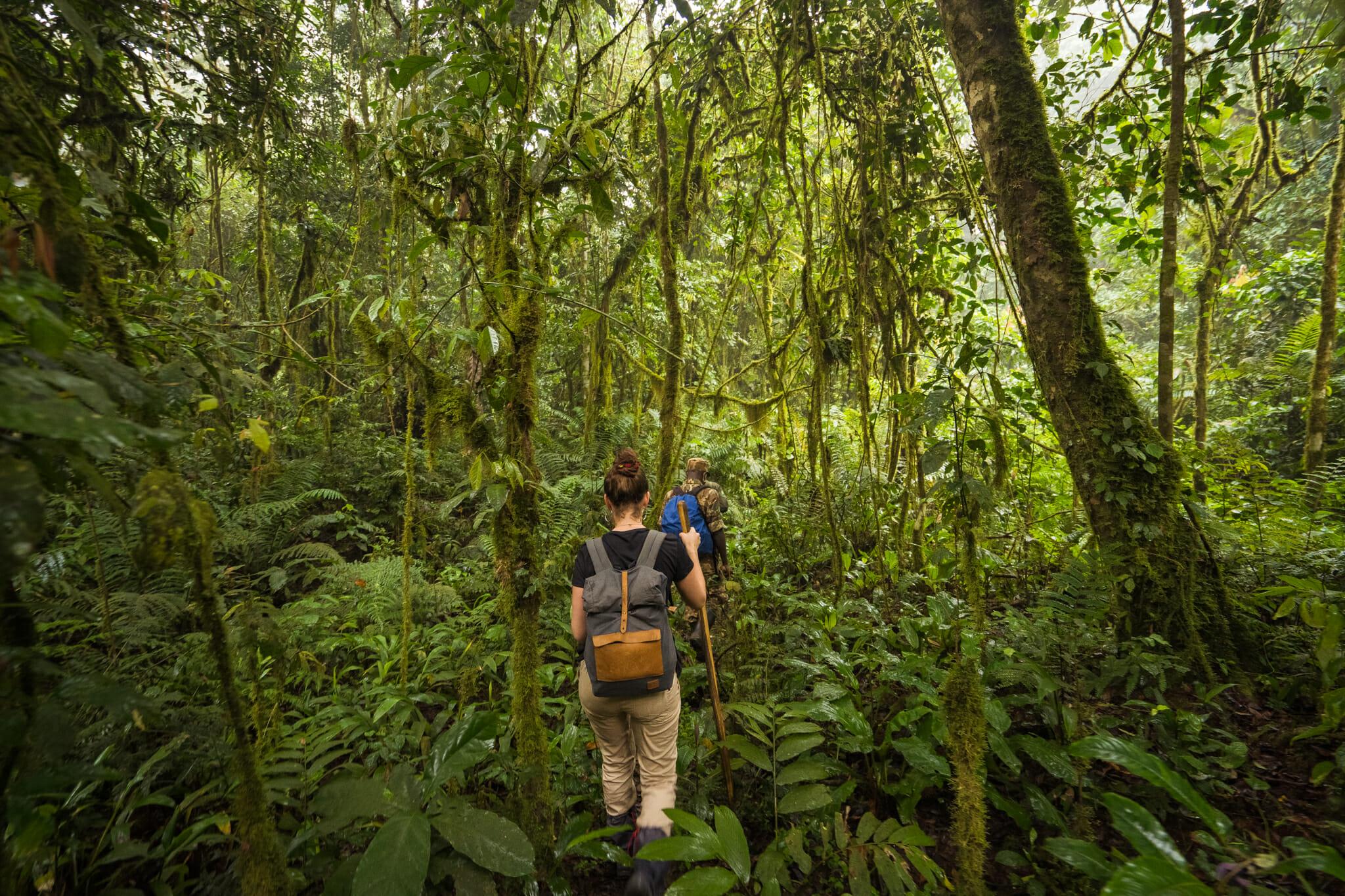 en plein coeur de la forêt impénétrable de bwindi pour le début du trekking en ouganda