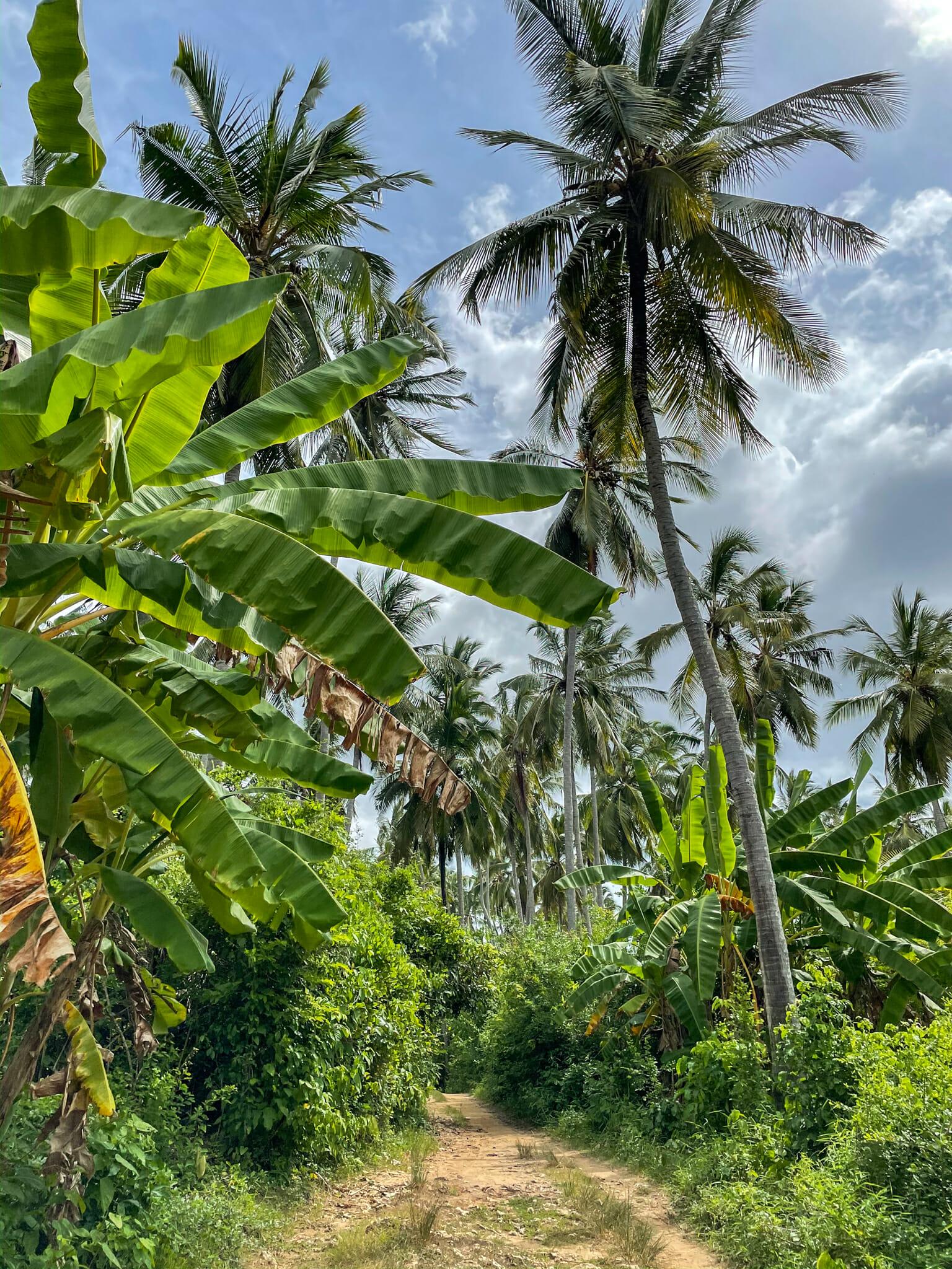 randonnée sur l'île de mafia island