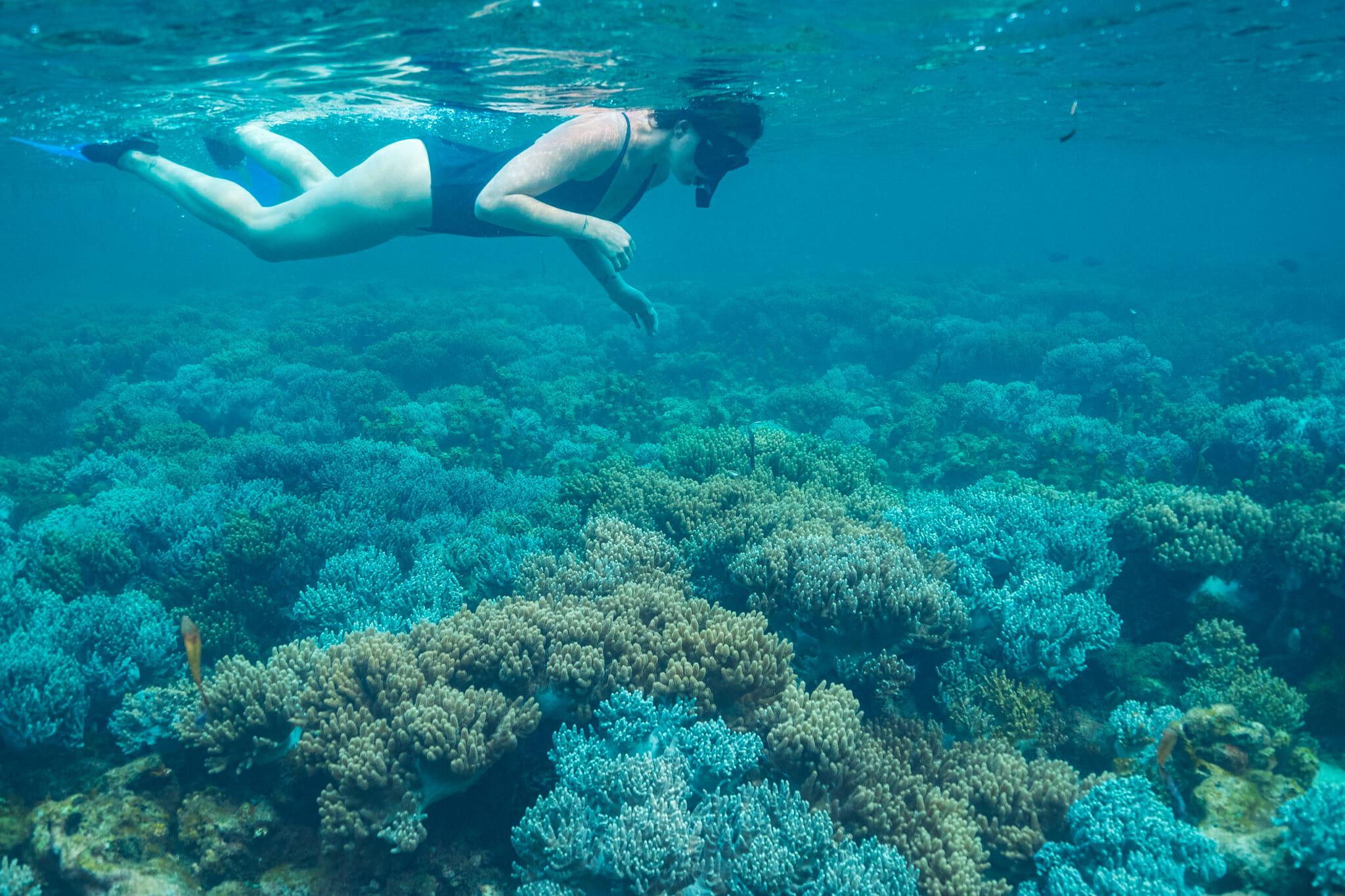 snorkelling dans les fonds-marins de mafia island